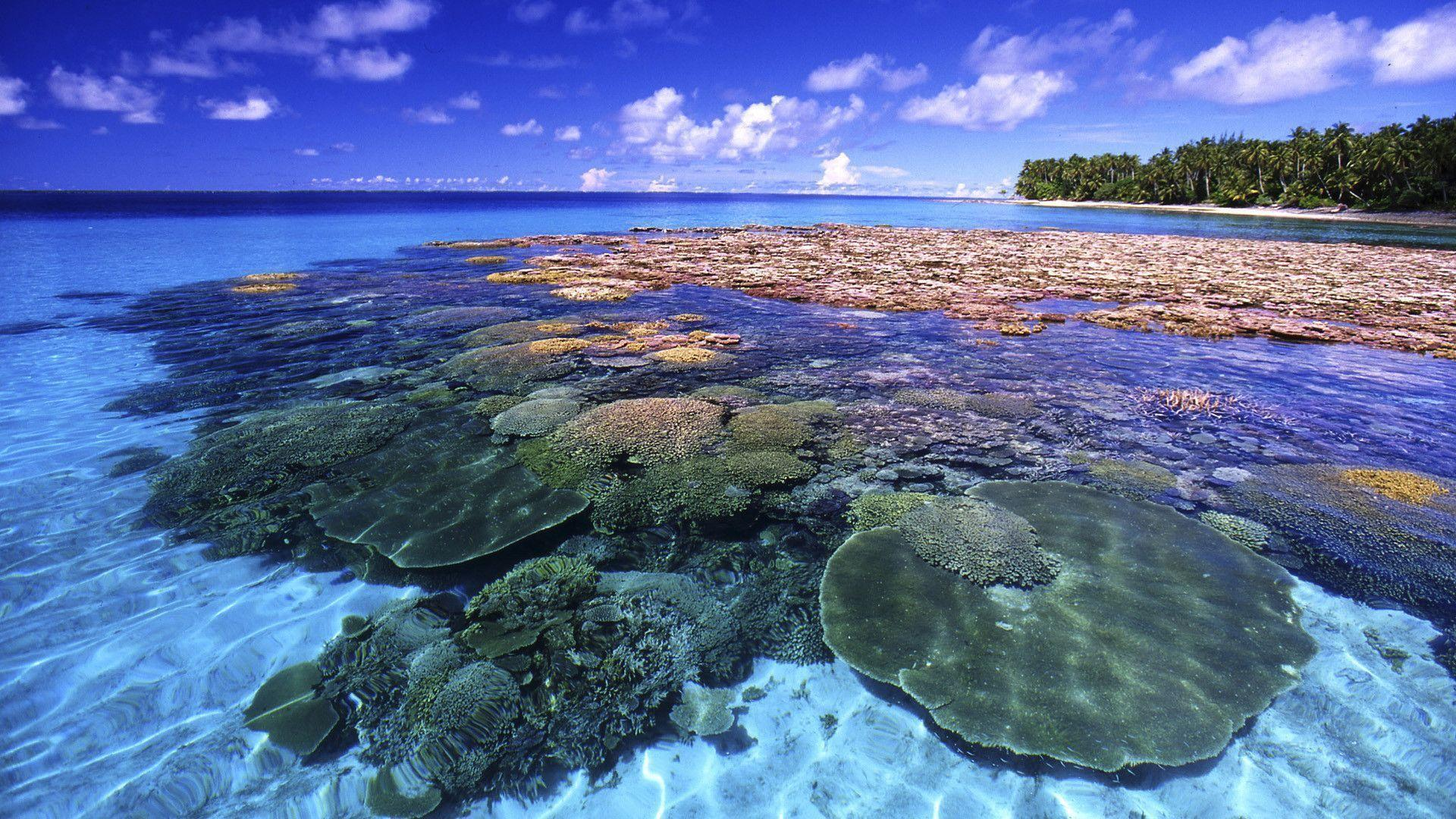 HD Beautiful Coral Reef Wallpaper | Download Free - 60780
