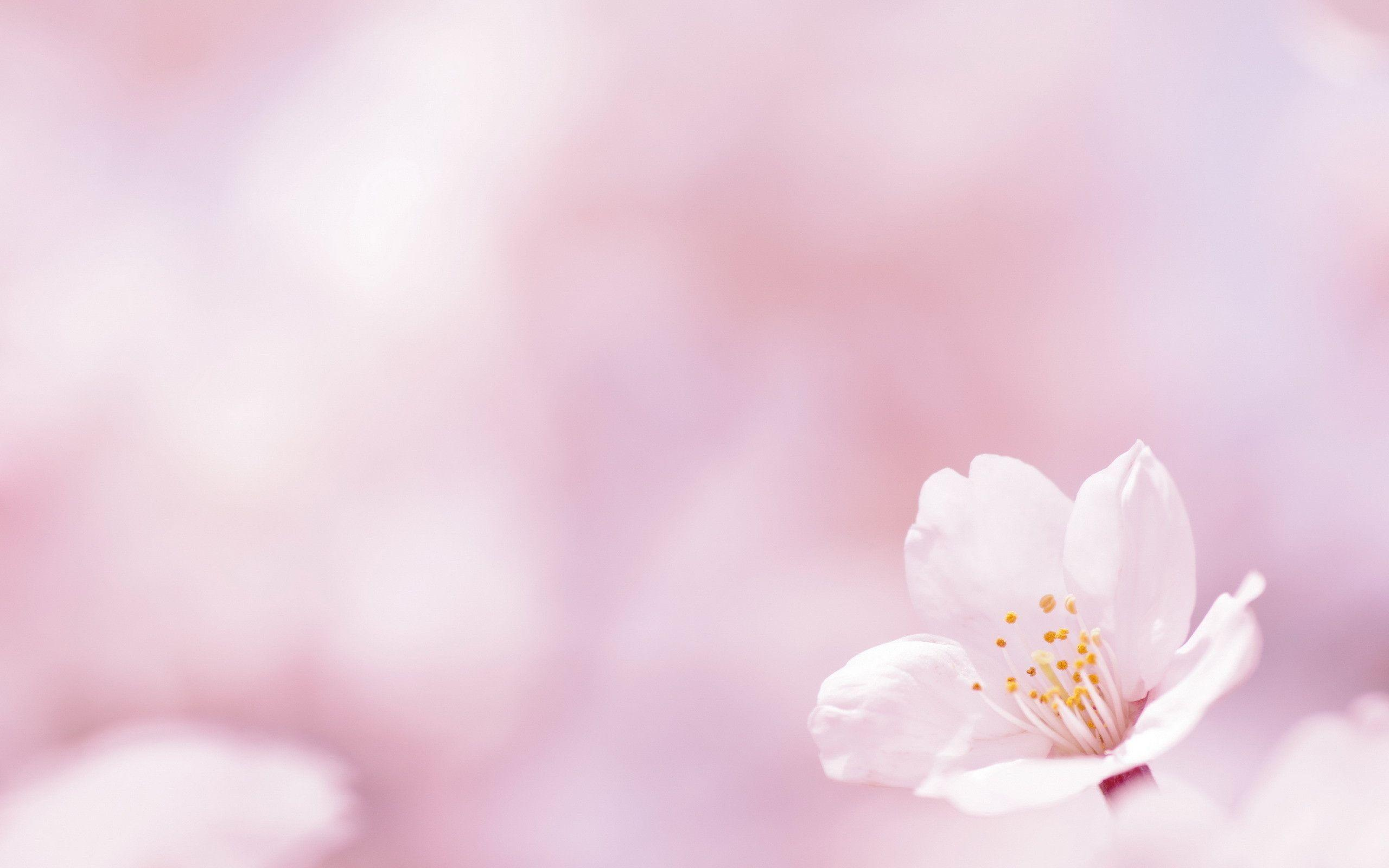 spring flowers backgrounds desktop wallpaper cave
