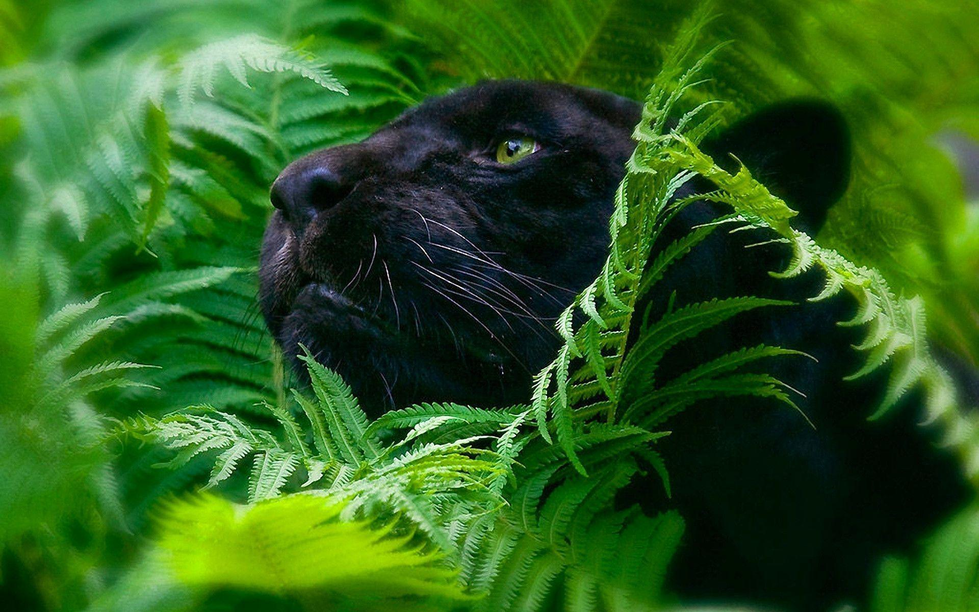 black leopard backgrounds - photo #30