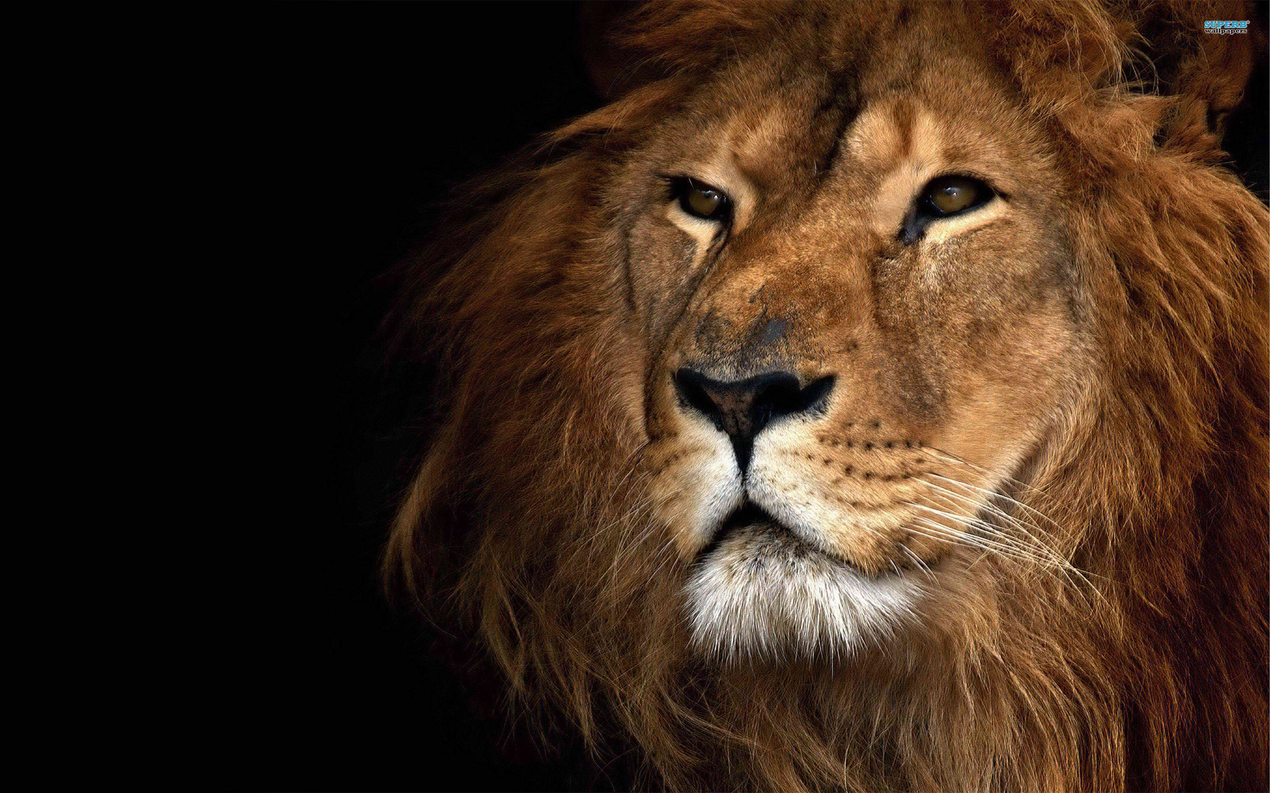 Lion Wallpaper Download Free · Air Force Wallpapers | Best Desktop ...