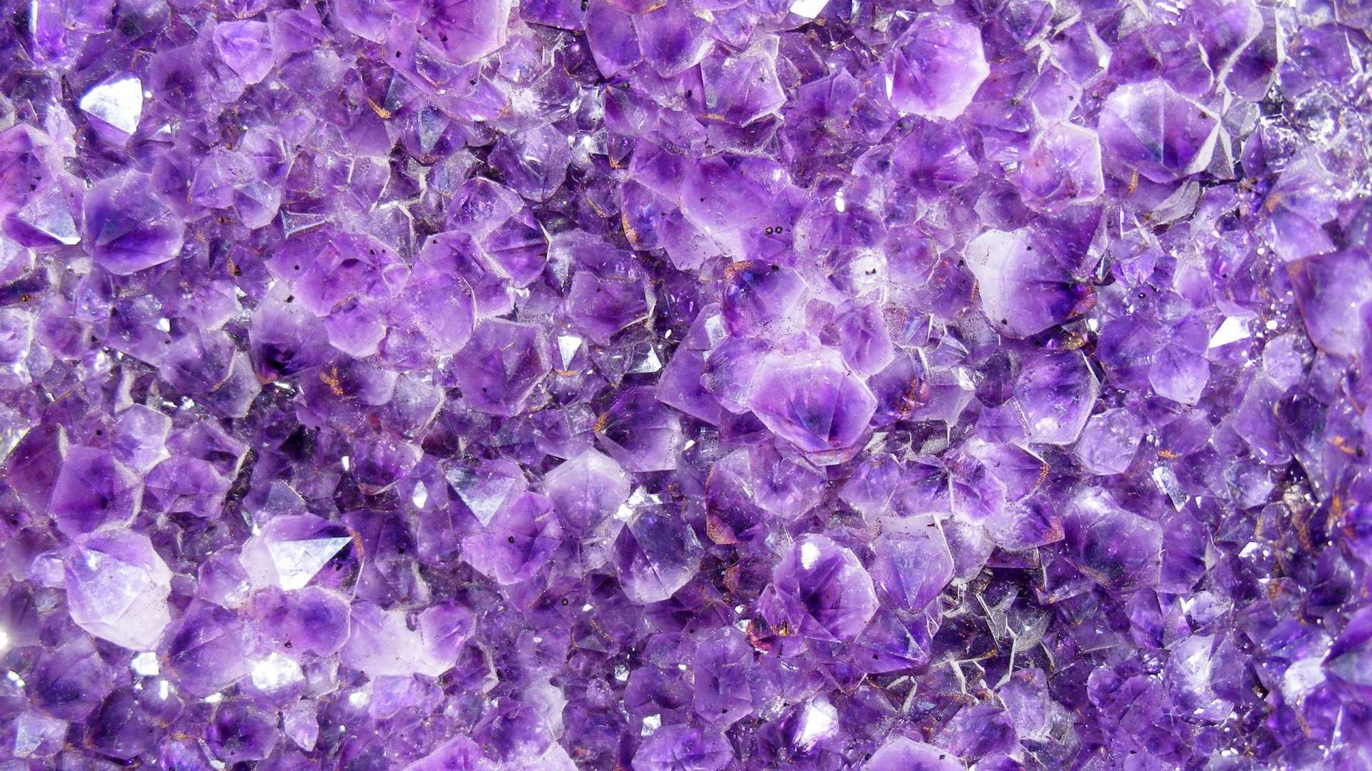 lavender flowers wallpapers 2560x1440 - photo #49