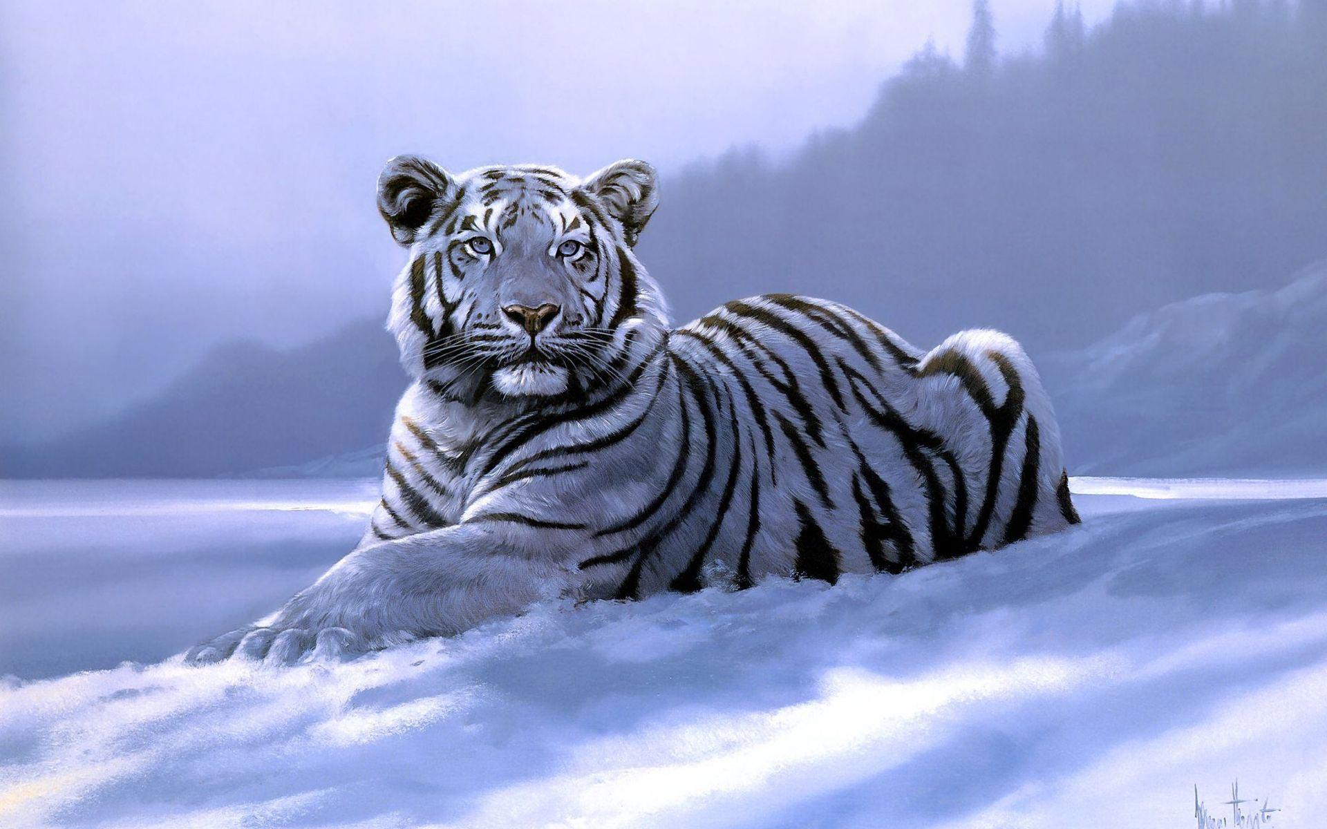 Wallpapers For > Siberian Tiger Wallpapers