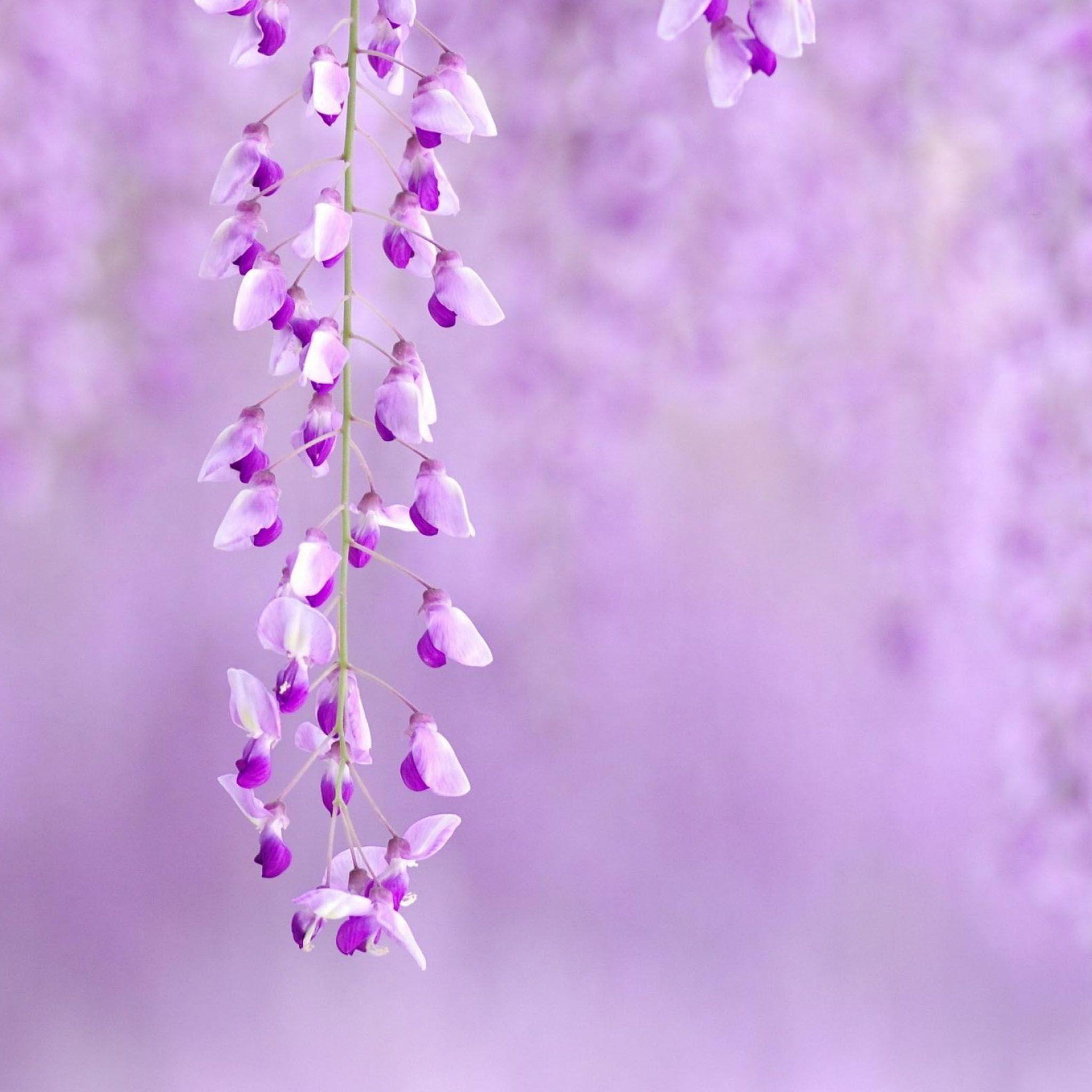 Wallpapers For > Light Purple Flower Background