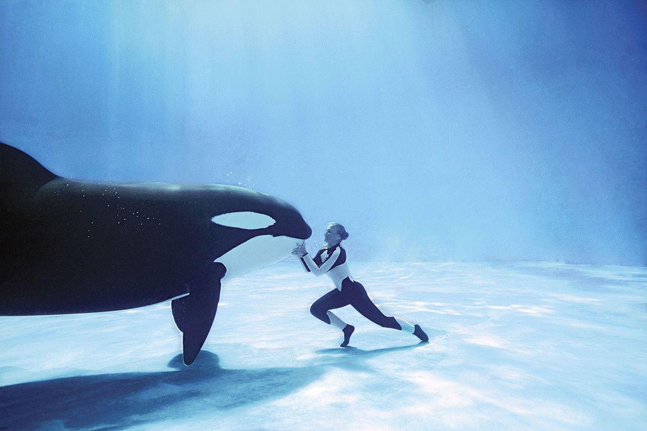 Orca Whale Wallpapers Wallpaper Cave