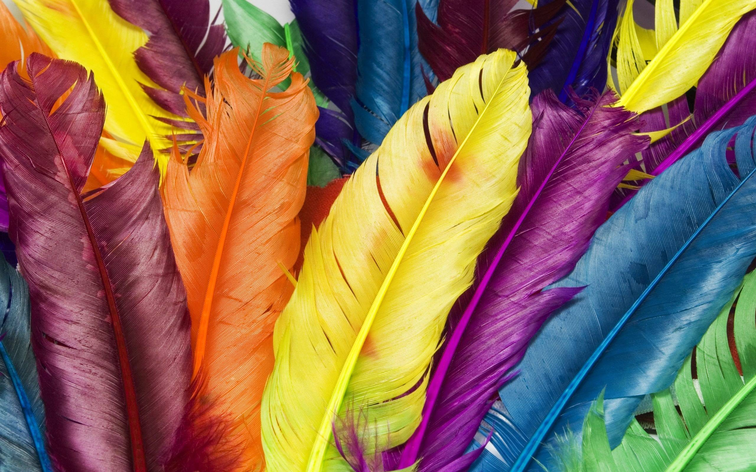 Hd wallpaper colour - Feathers In Colors Wallpapers Hd Wallpapers