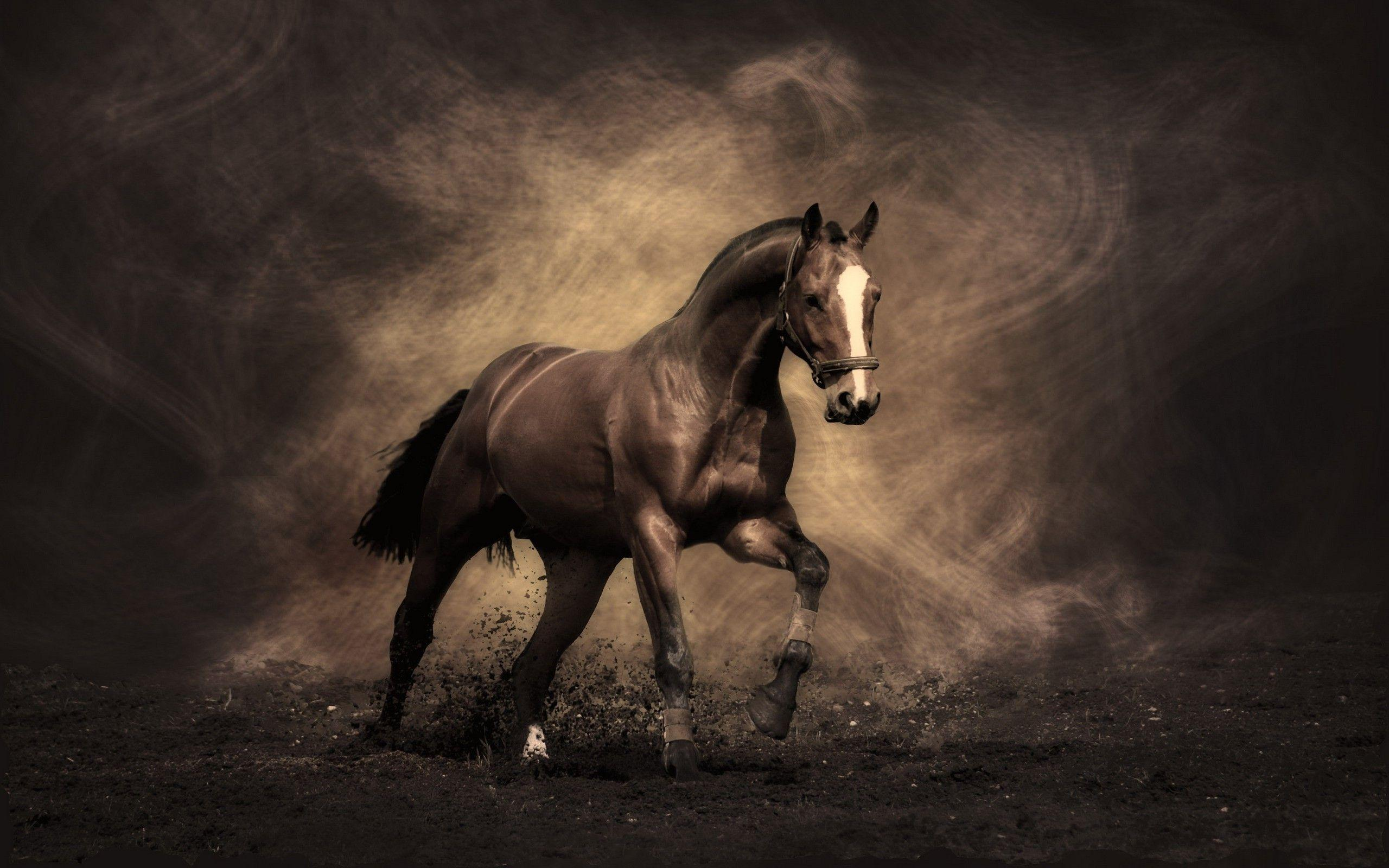 Horse Wallpapers Wallpaper Cave