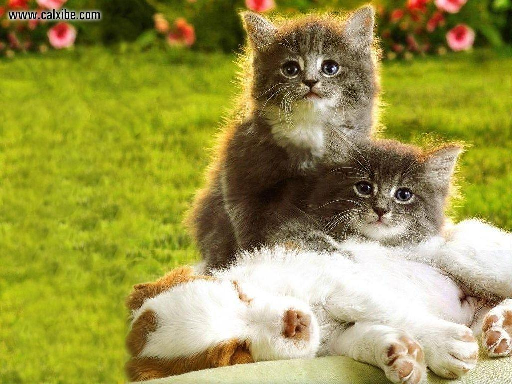 Wallpapers For > Cute Kittens And Puppies Wallpapers