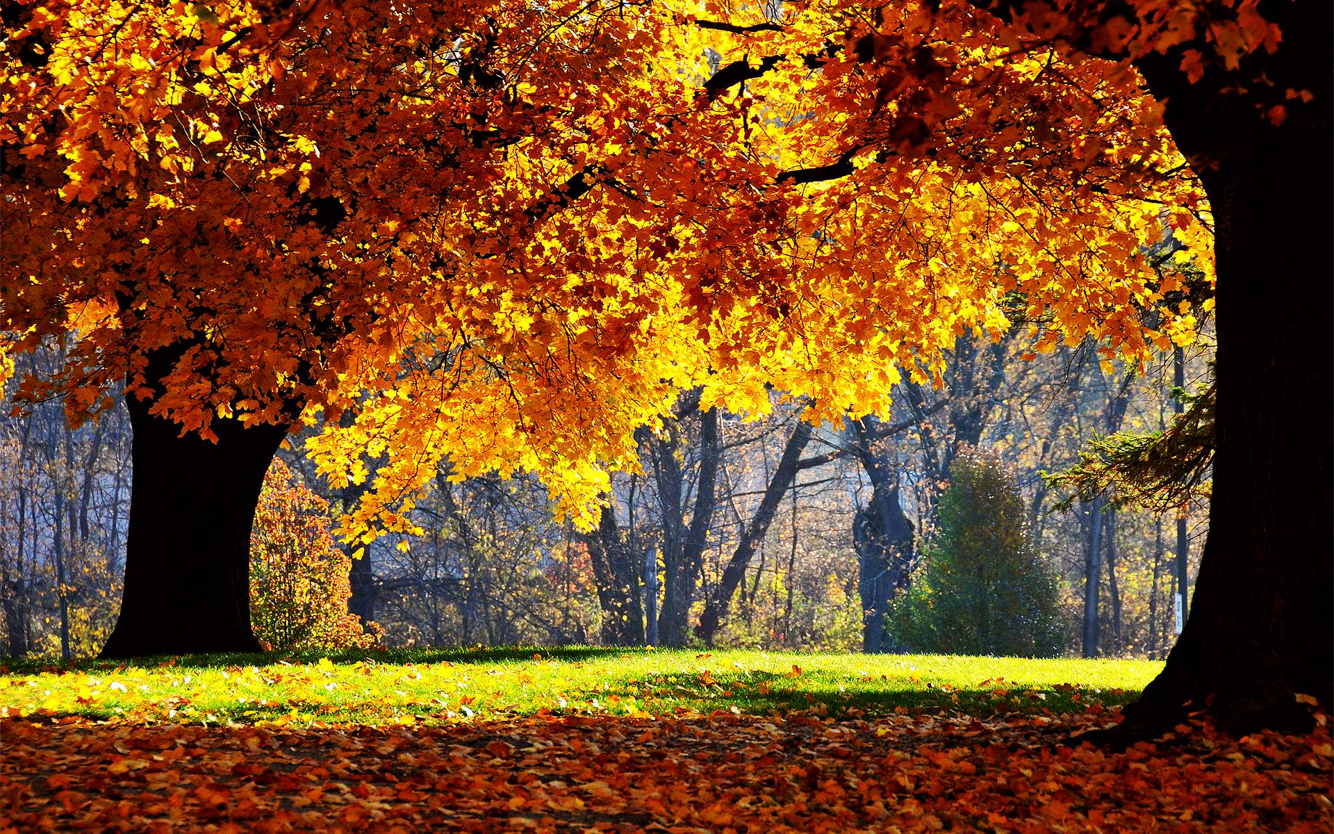 fall foliage wallpapers for desktop – 1920×1200 High Definition