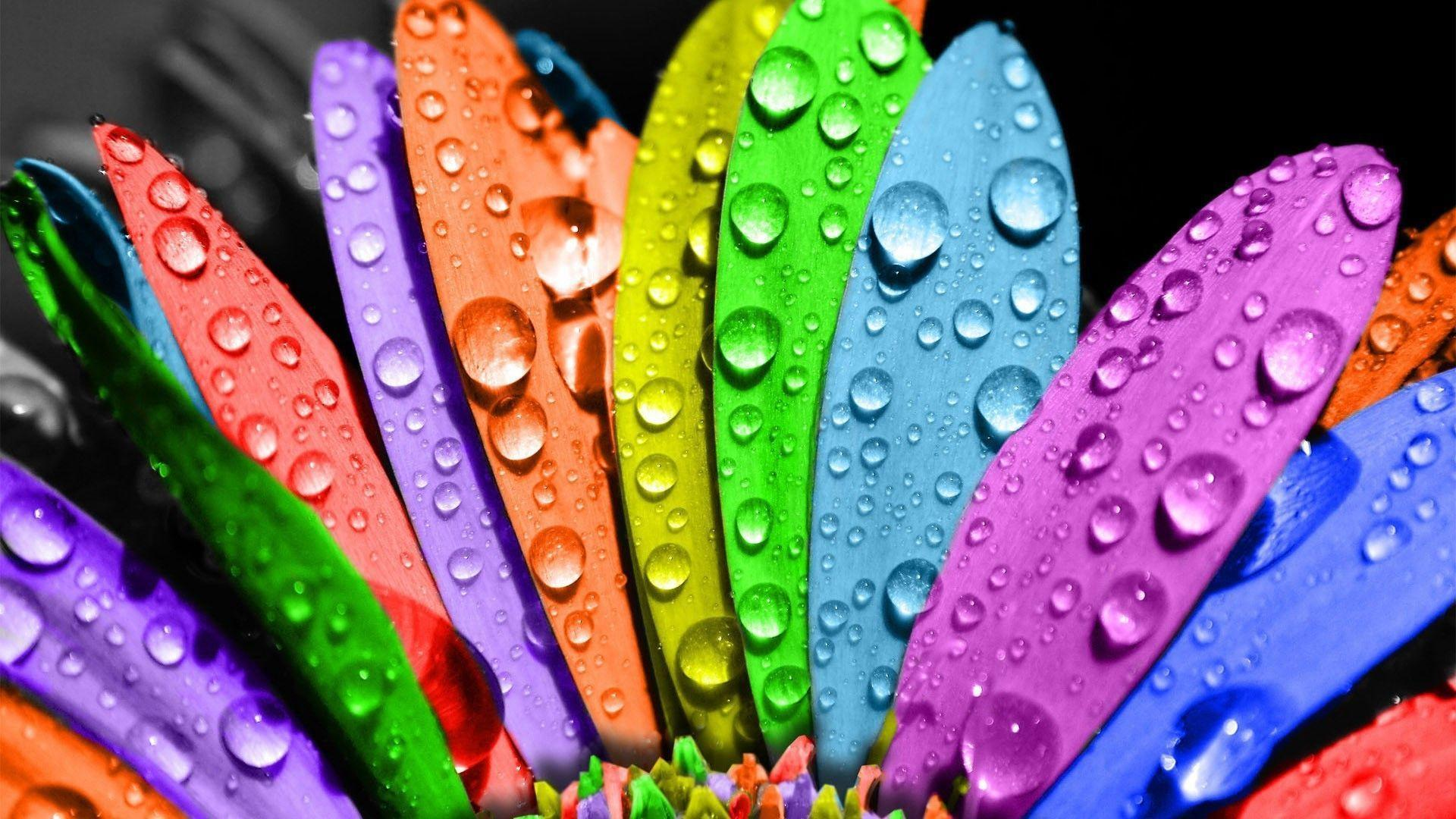 Cute Colorful Wallpapers