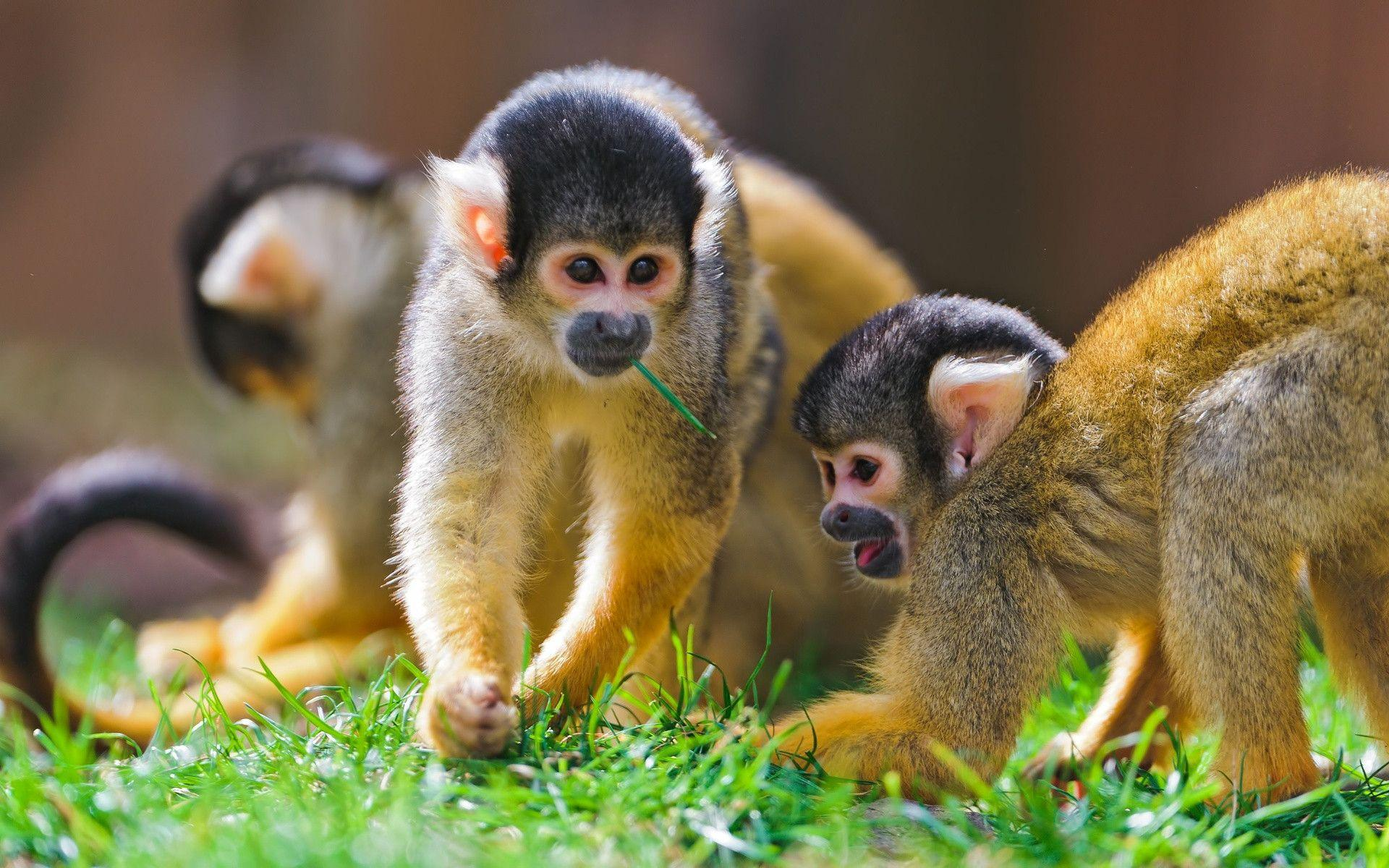 168 Monkey Wallpapers | Monkey Backgrounds Page 2