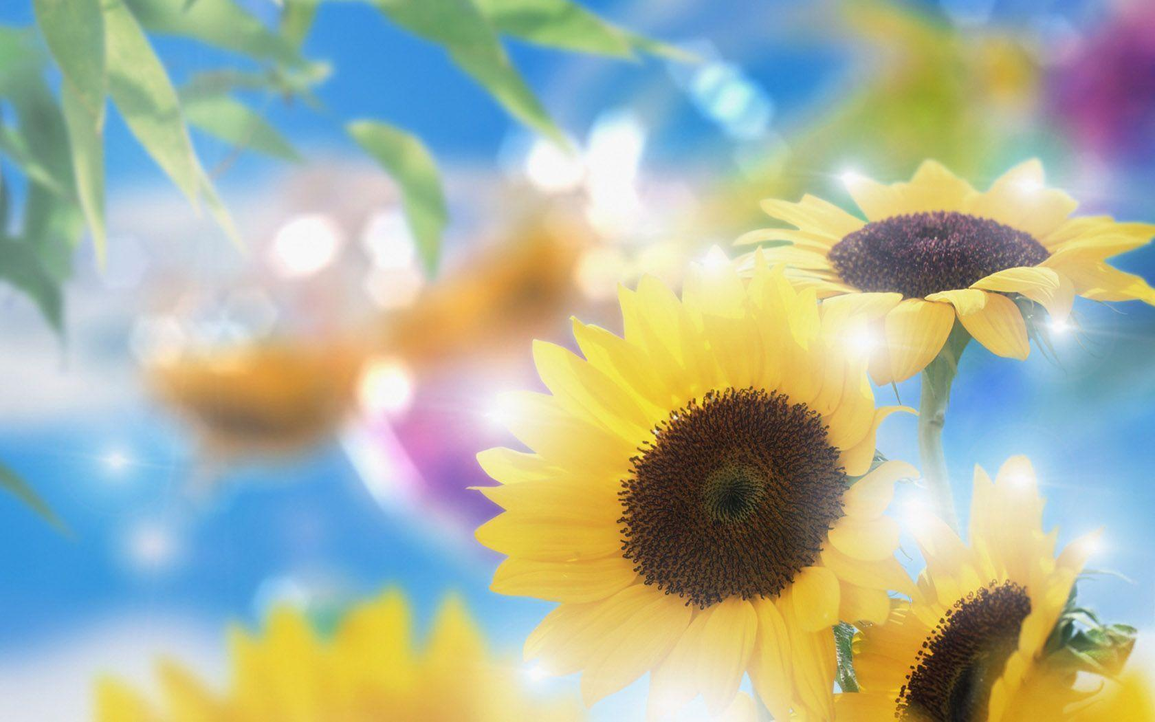 Dreamy Summer Time Sunflowers And Sunlight Wallpapers