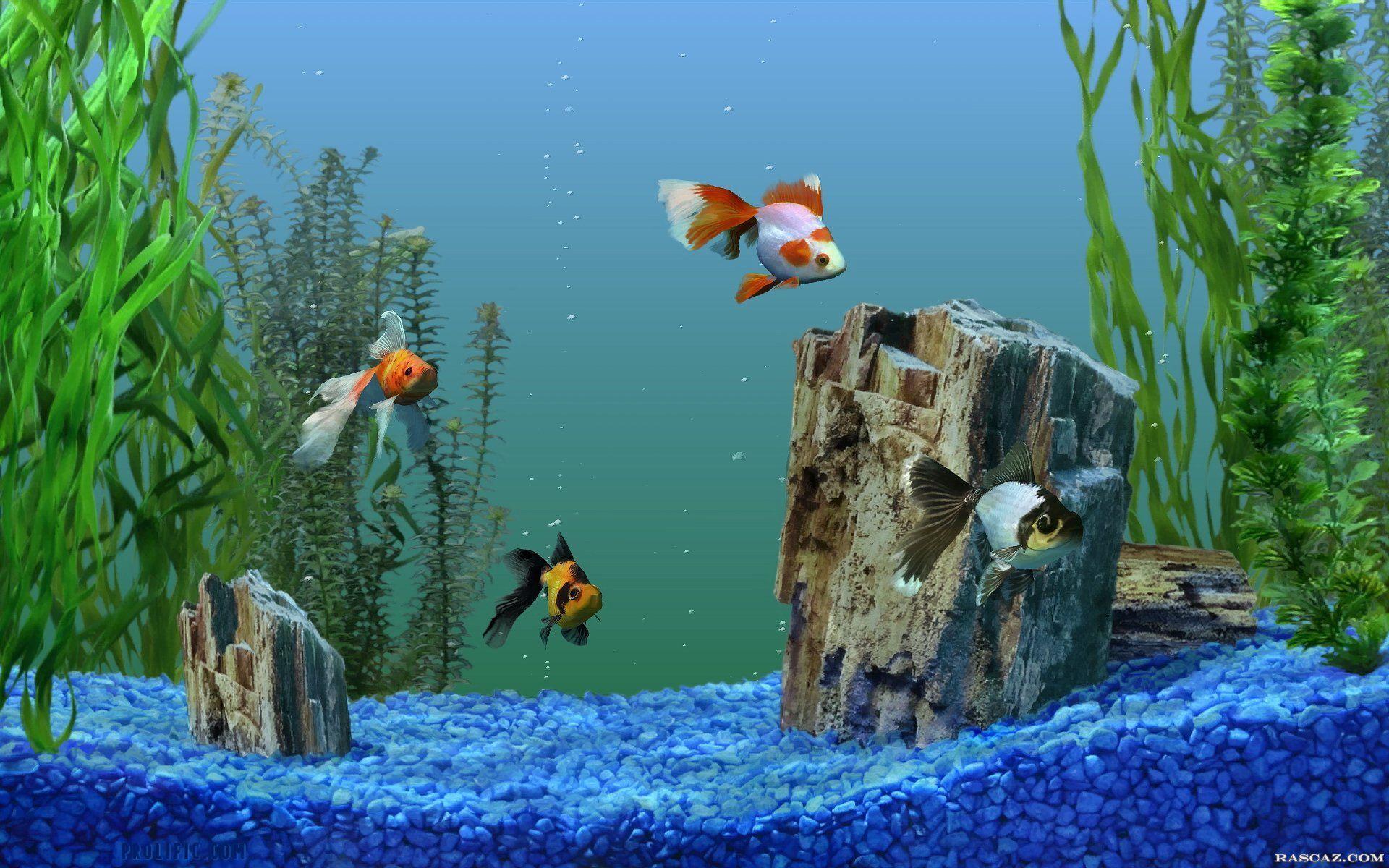 Google screensavers and wallpapers wallpaper cave - Fish tank screensaver pc free ...
