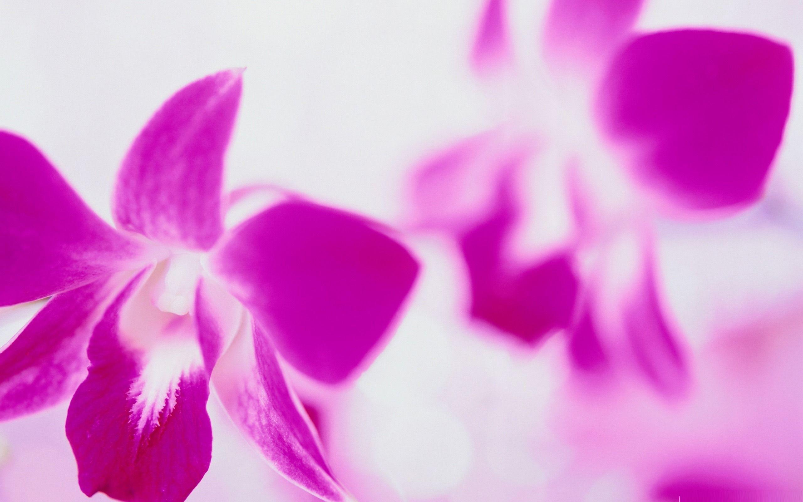 Purple Flowers Background - 1685394