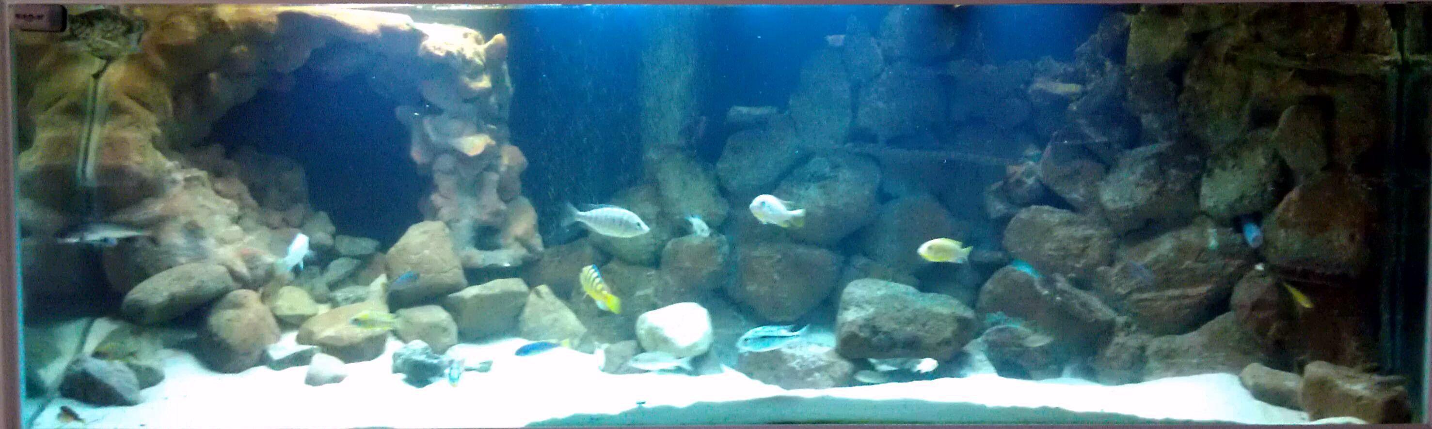 3D freshwater aquarium backgrounds - Aquarium Advice