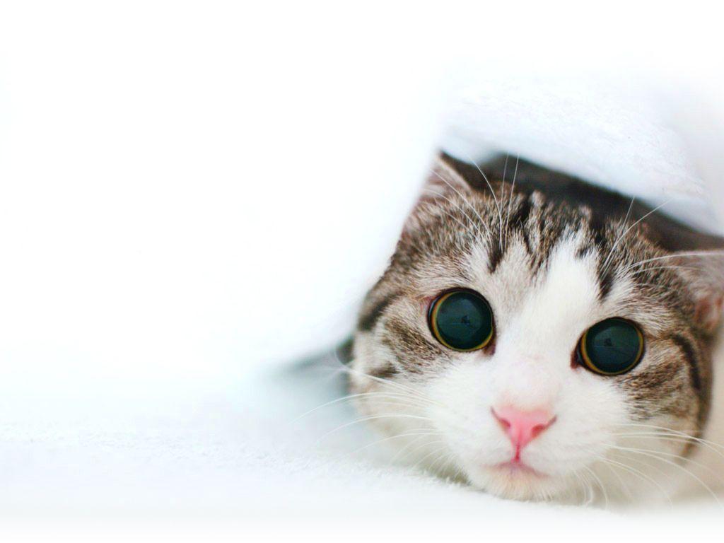 Cat Wallpapers Desktop  Wallpaper Cave