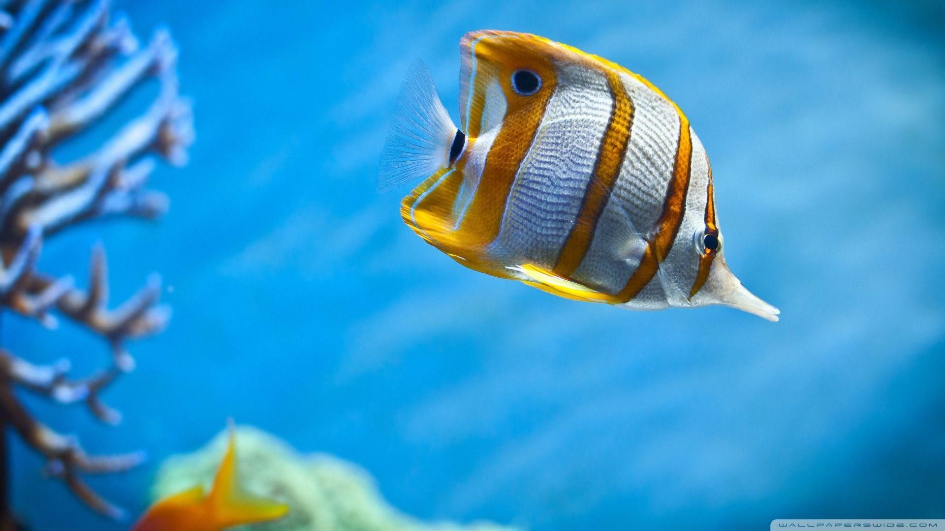 Tropical Fish Wallpapers