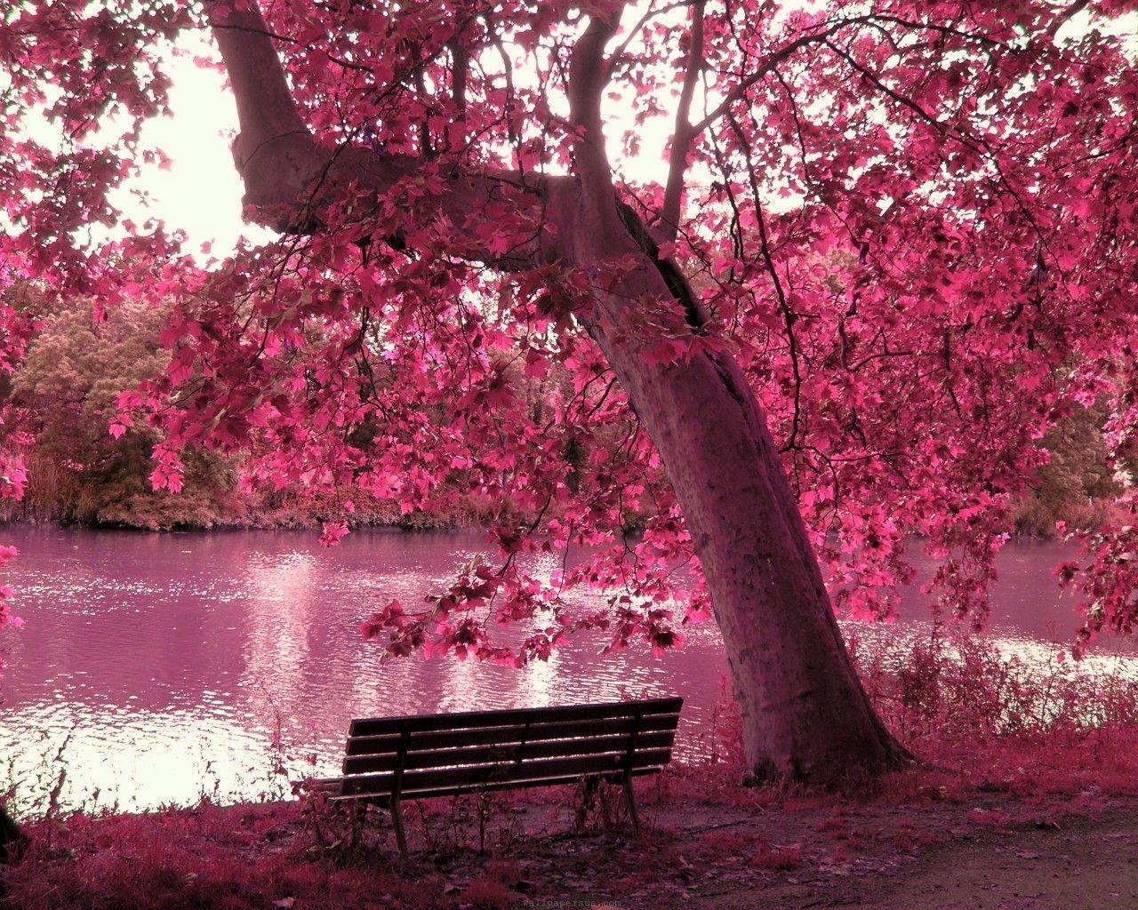 Beautiful Pink Wallpapers - Wallpaper Cave