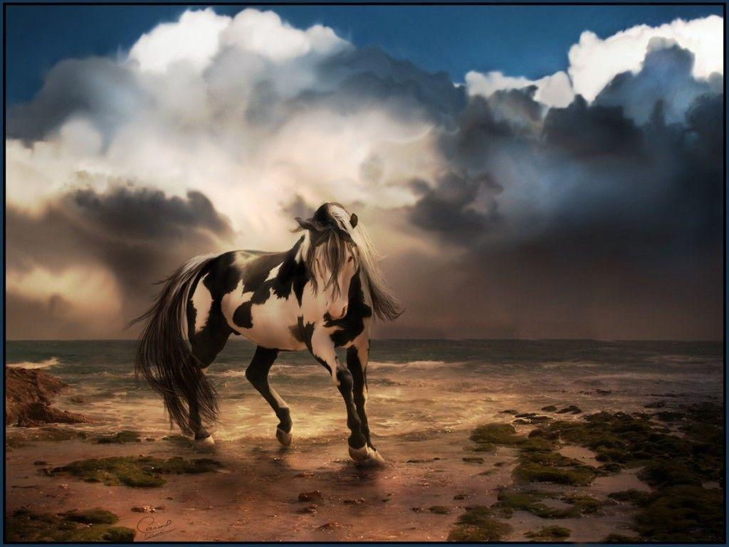 horse wallpapers for laptop - photo #5