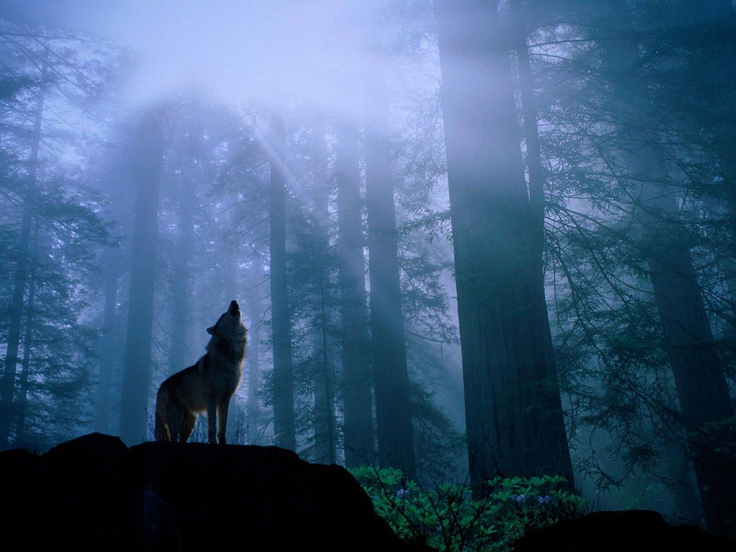 Grey Wolf Wallpapers - Wallpaper Cave
