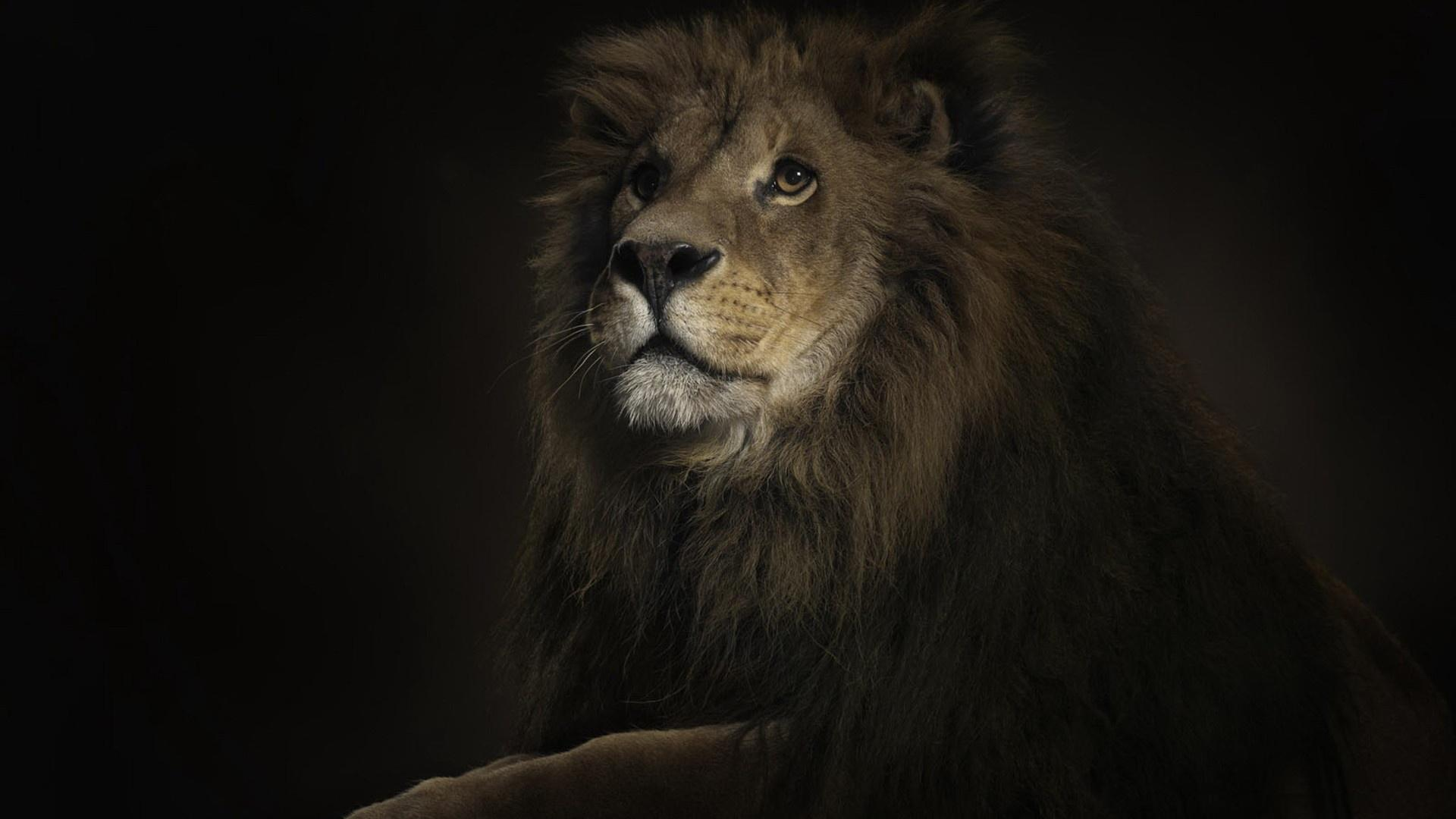 Wallpaper download download - 788 Lion Wallpapers Lion Backgrounds