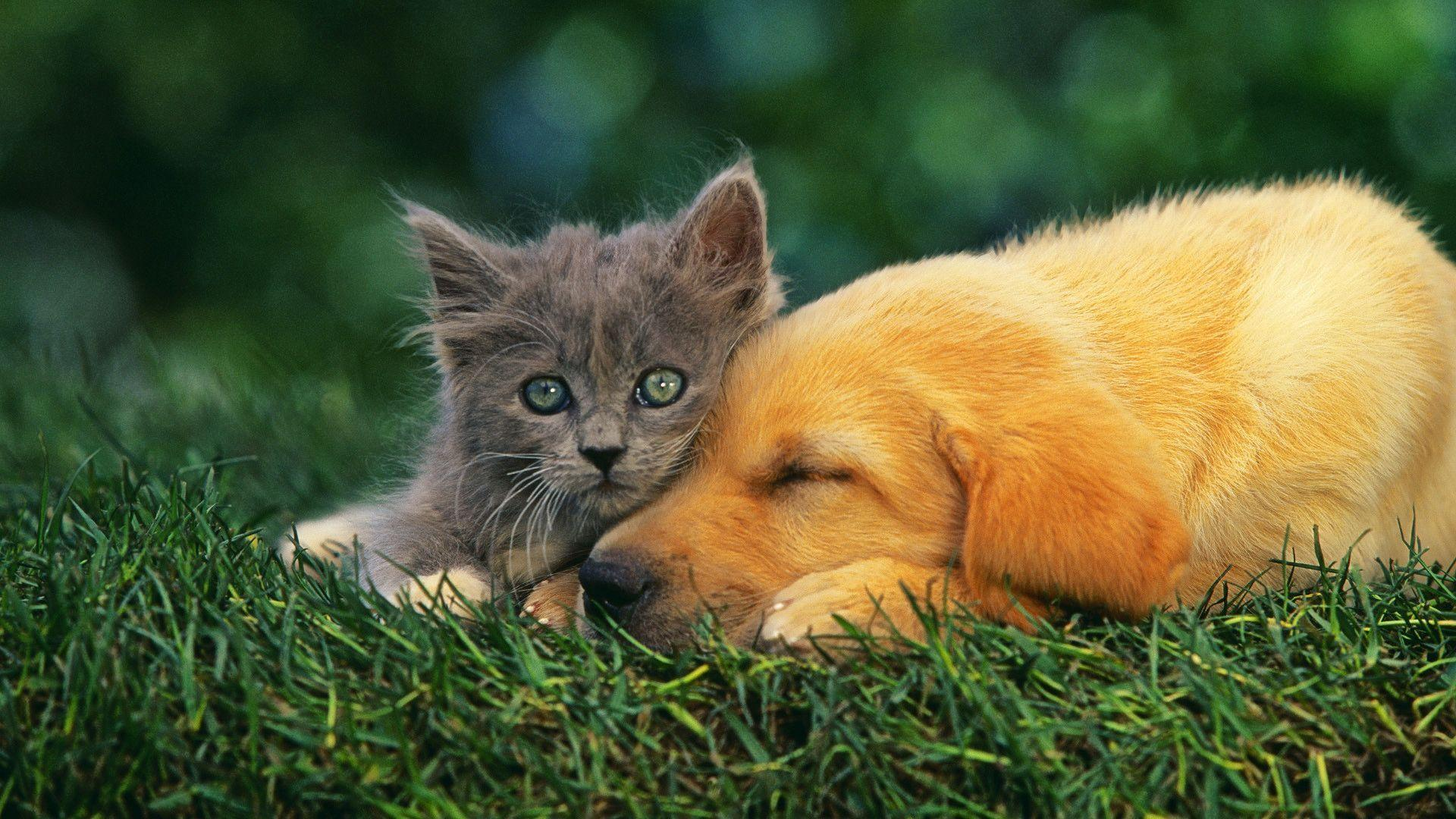 cat And Dog Love Wallpaper : Dog And cat Wallpapers - Wallpaper cave
