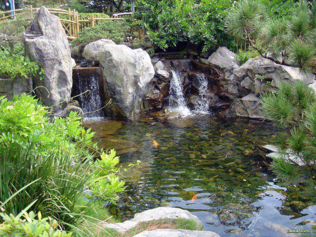 Koi pond wallpapers wallpaper cave Kio ponds