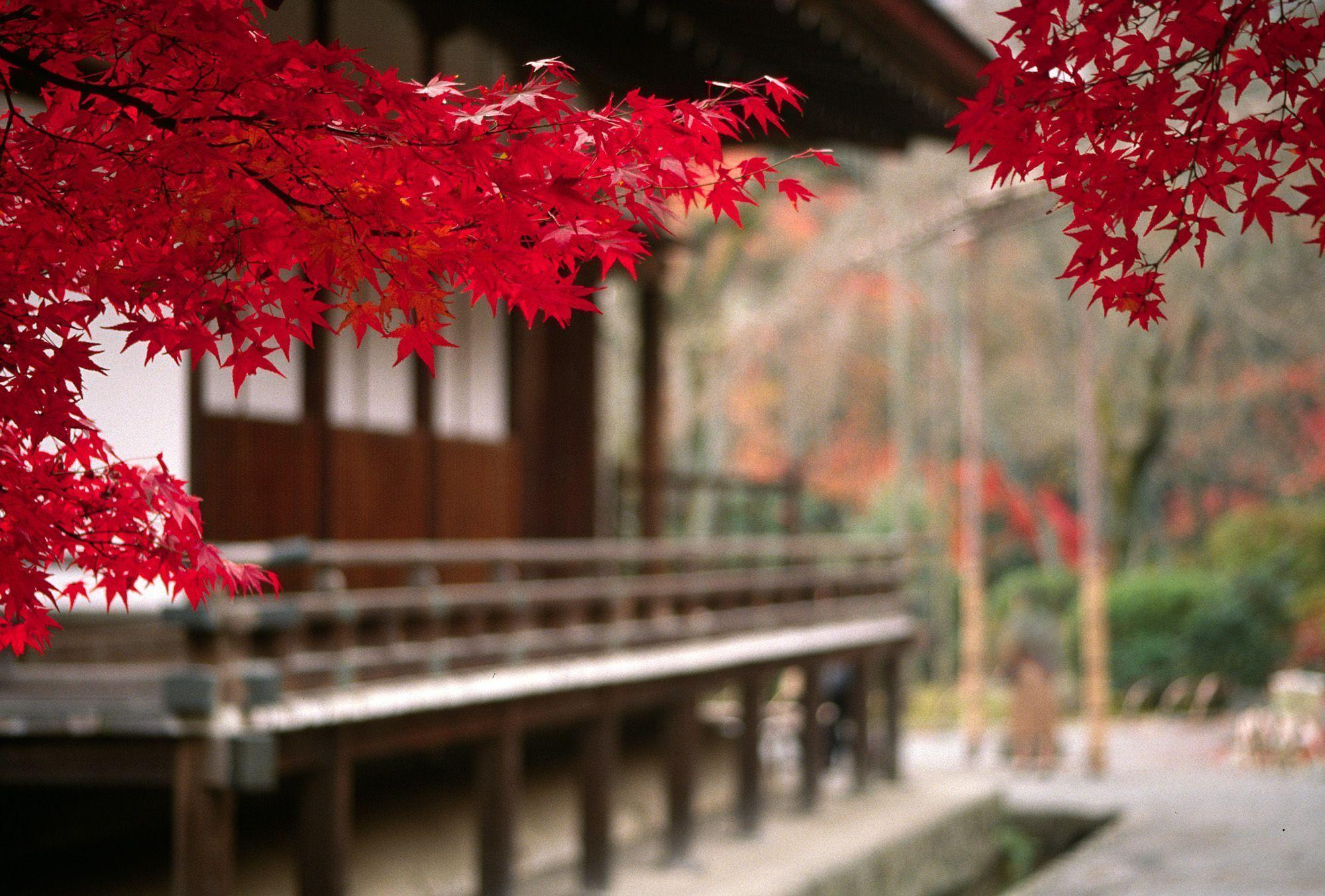 Japan Wallpapers and Images: Japanese Temple Scenery Wallpapers