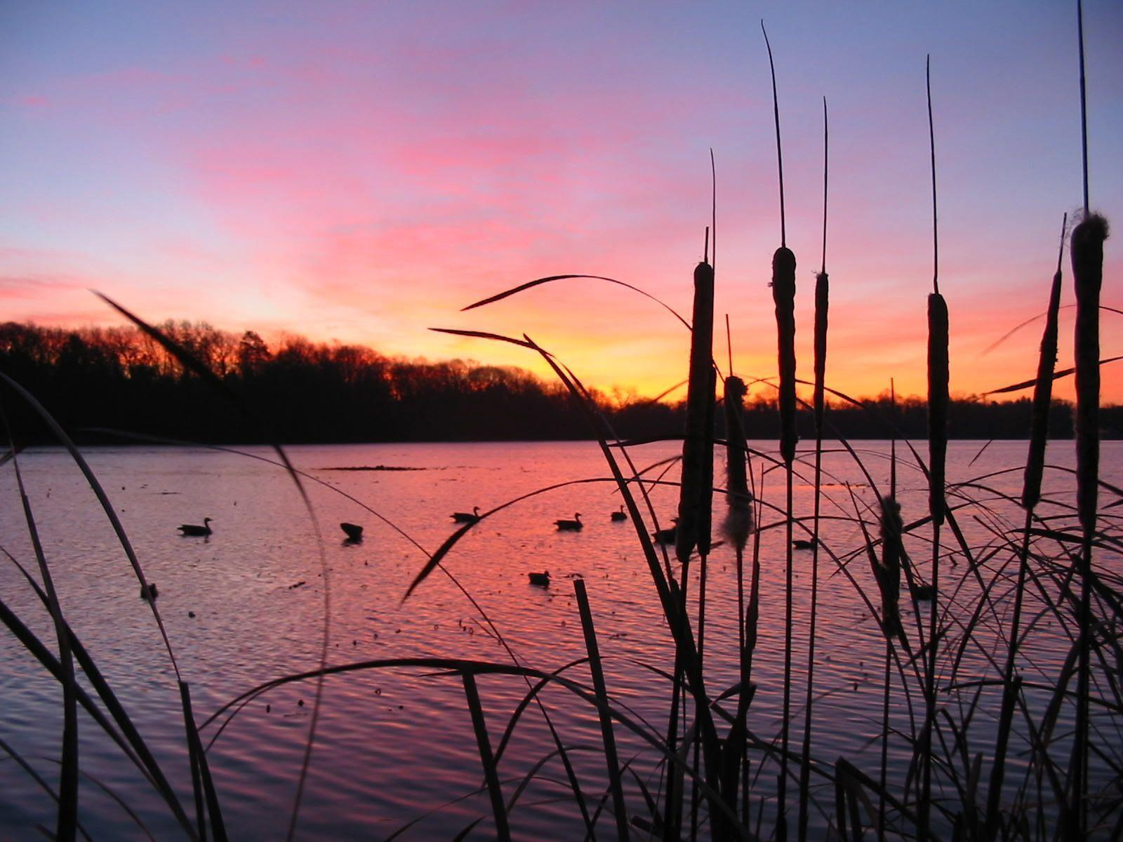 Duck Hunting Backgrounds - Wallpaper Cave