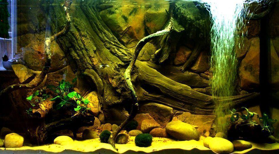 Aquarium Backgrounds and aquarium decoration ideasAquarium ...