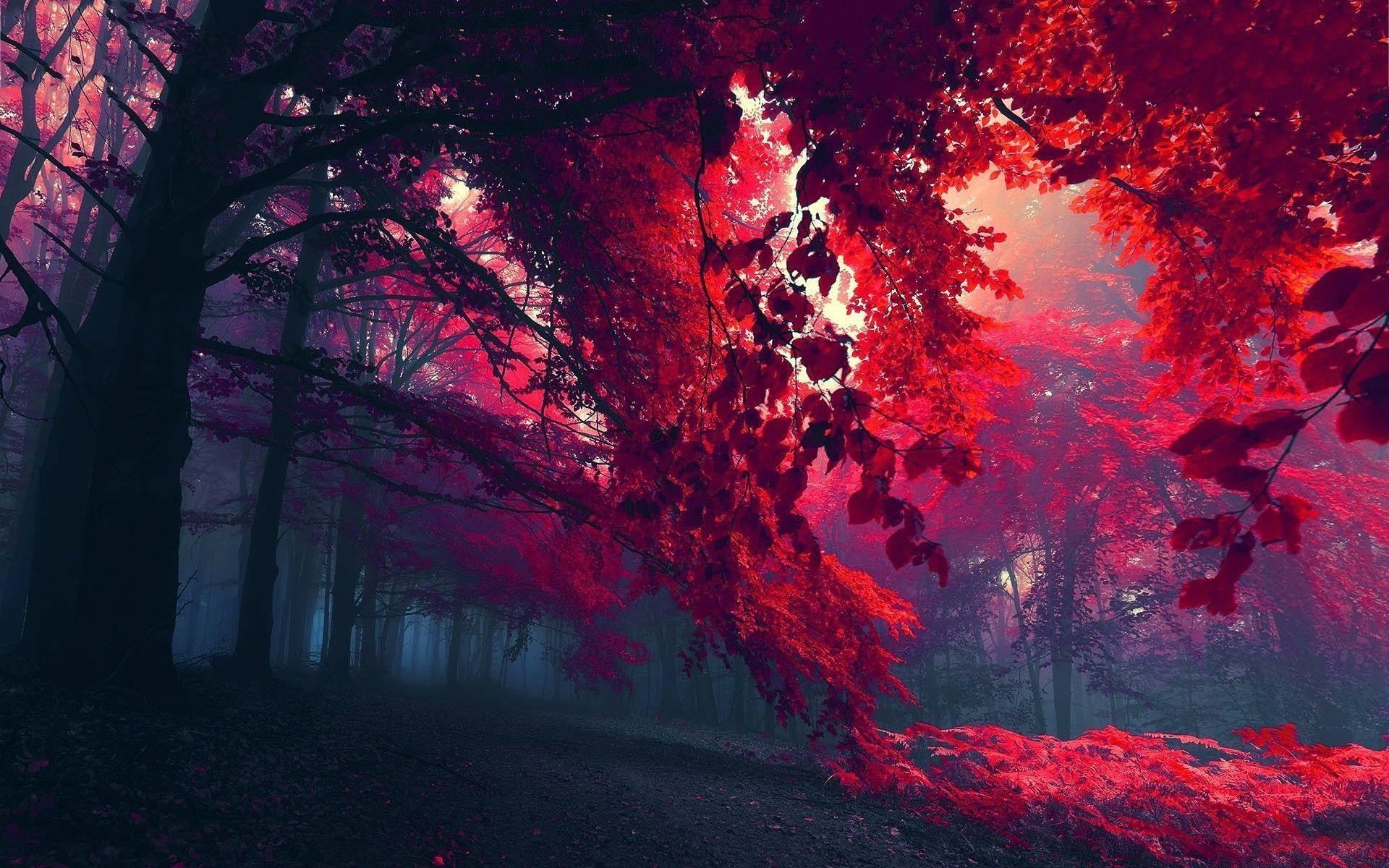 red leaves wallpapers - wallpaper cave