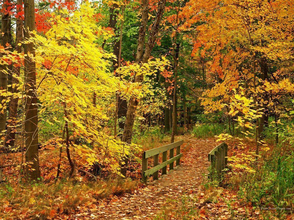 Beautiful Fall Wallpapers - Autumn Wallpaper (15496213) - Fanpop