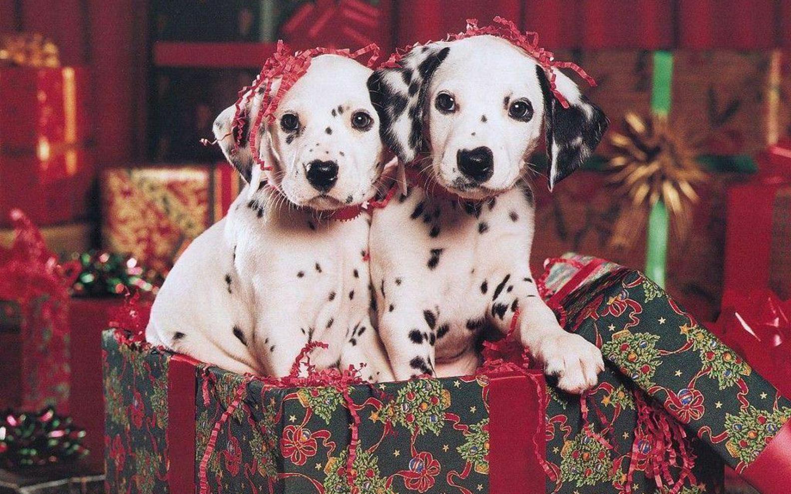 christmas puppy wallpaper - photo #38