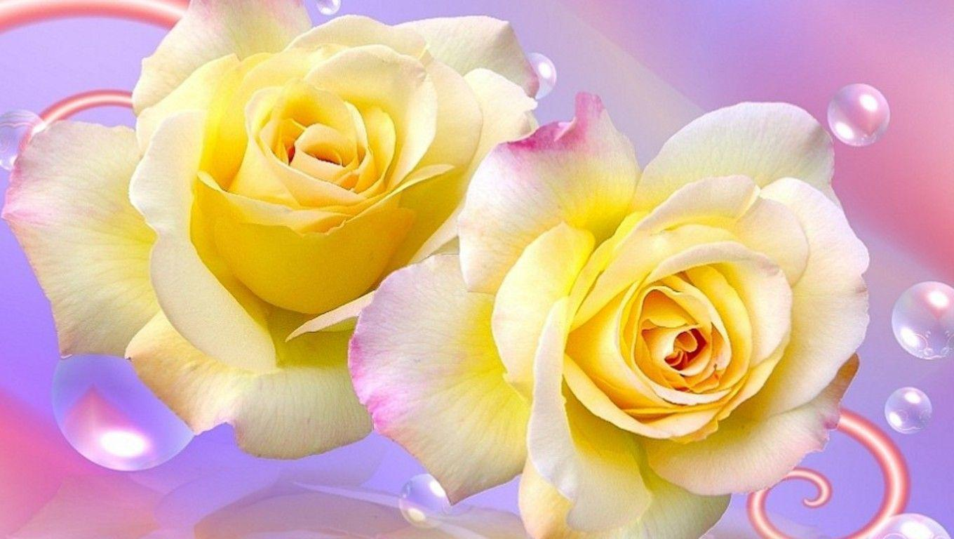wallpaper of yellow roses - photo #30