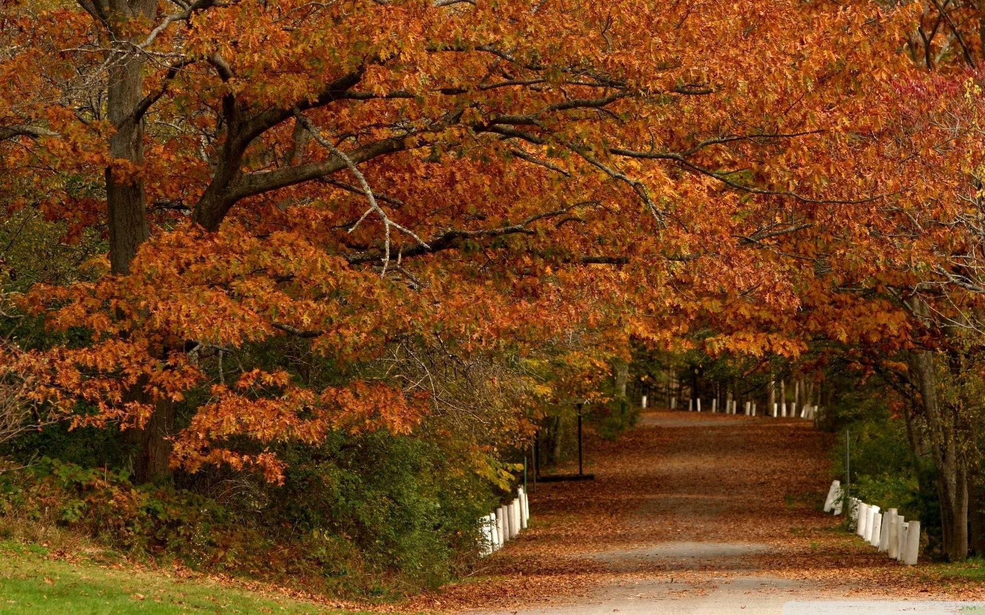 autumn wallpaper 007 free - photo #48