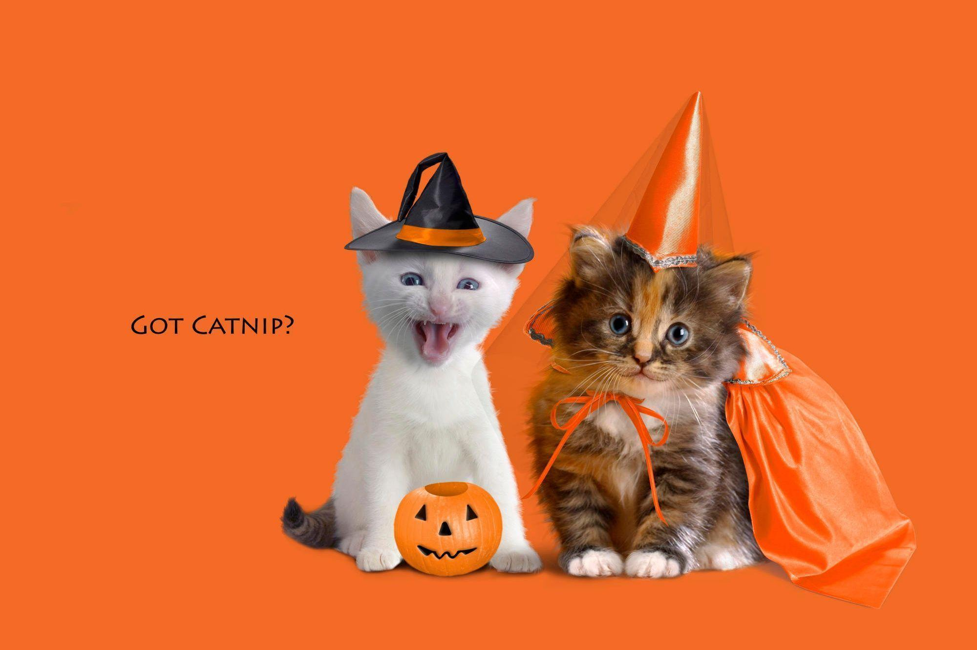 Images For > Cute Halloween Cat Images