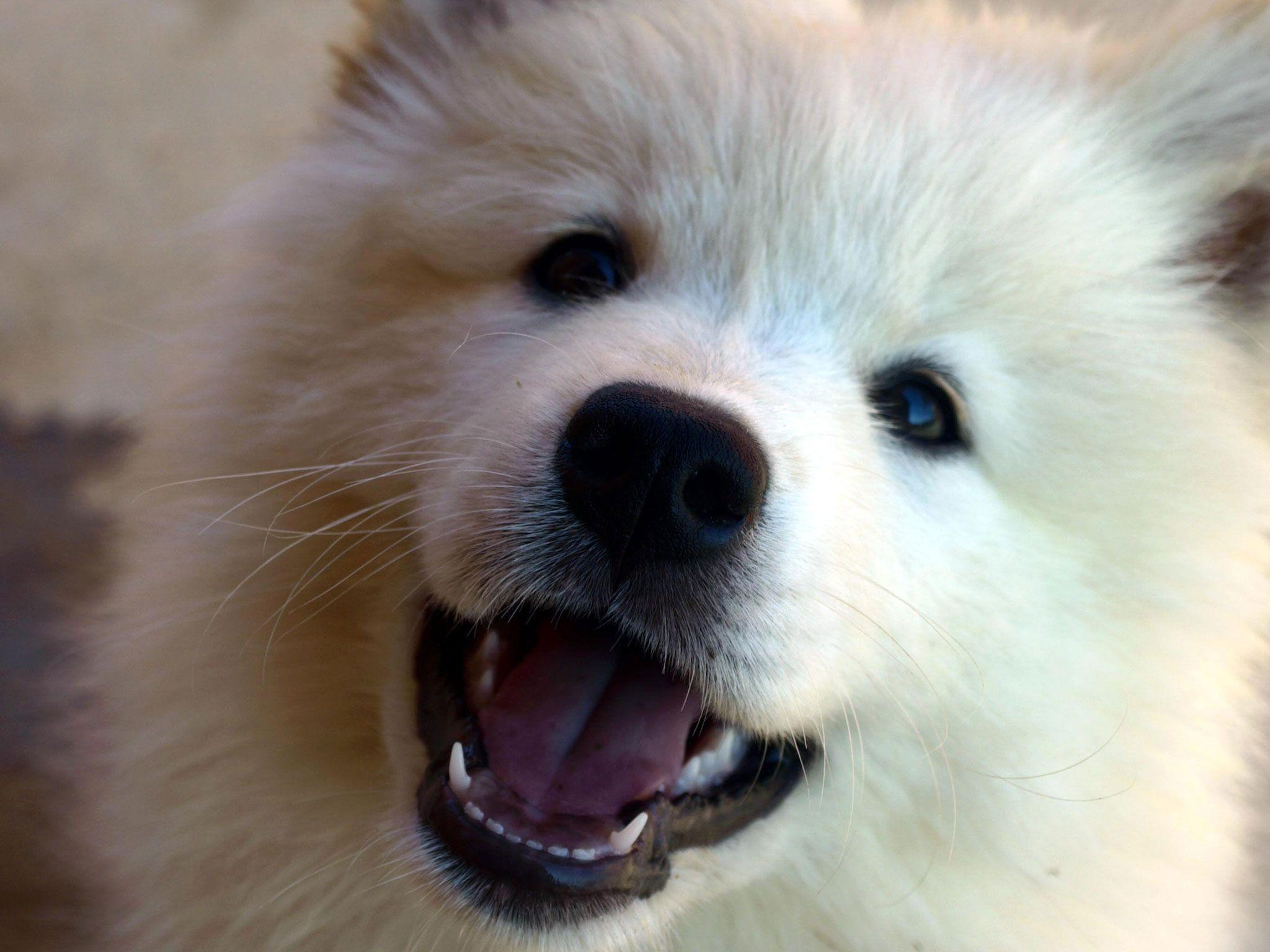 Top Selection of Dog Wallpapers