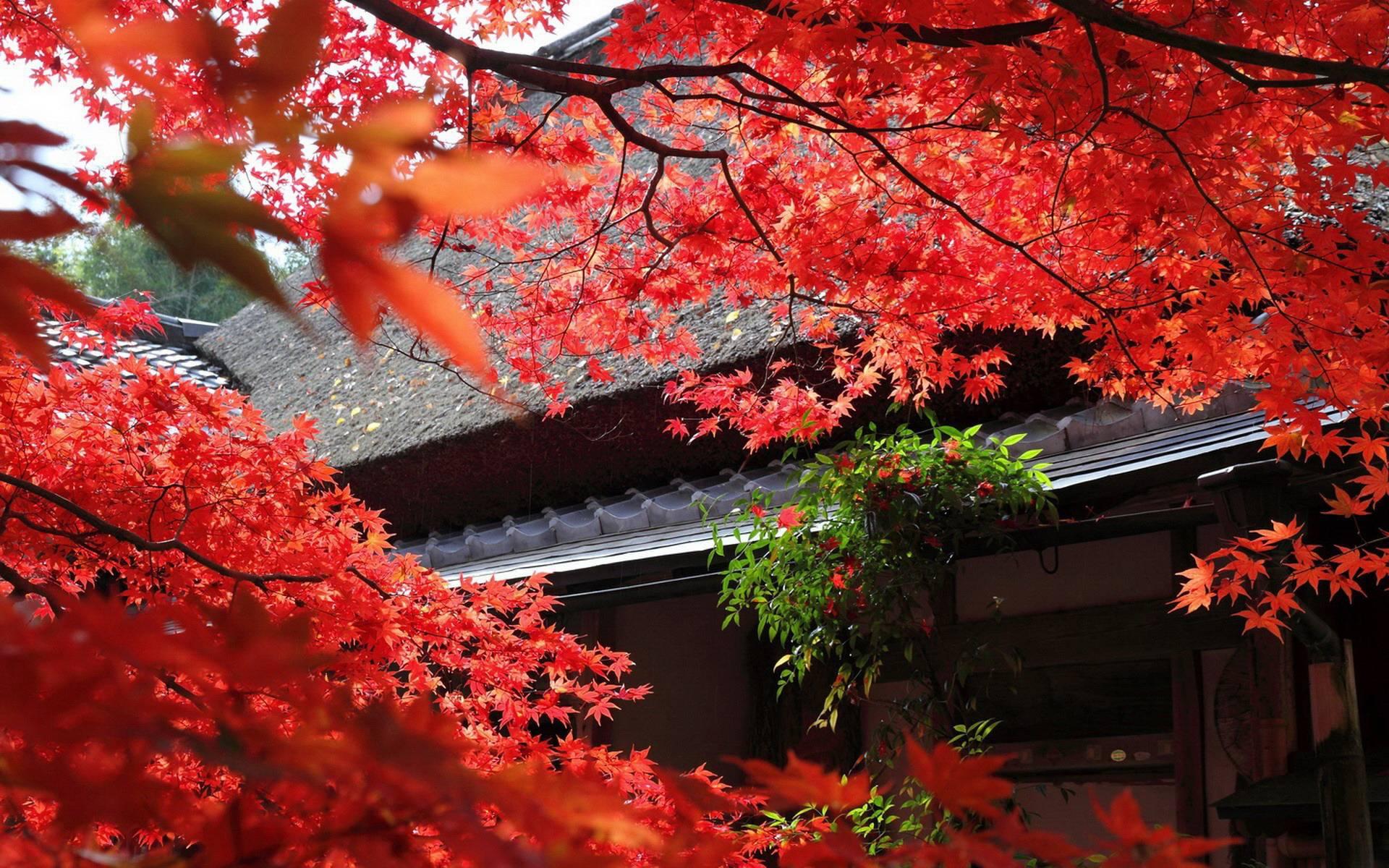 Japanese Garden Desktop Wallpapers - Wallpaper Cave