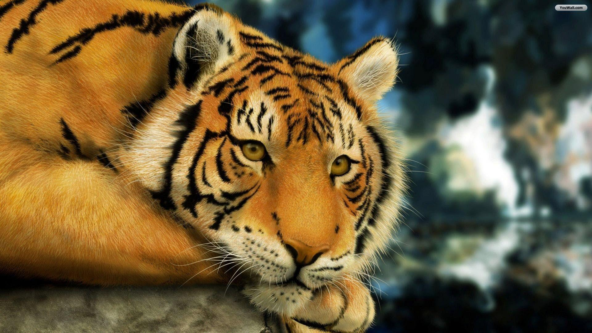 tiger wallpapers - wallpaper cave