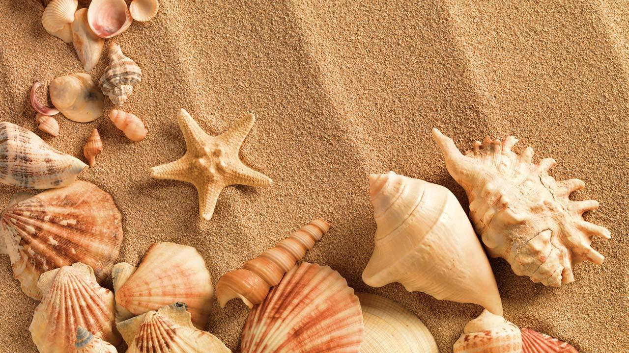 Sea Shell Live Wallpapers