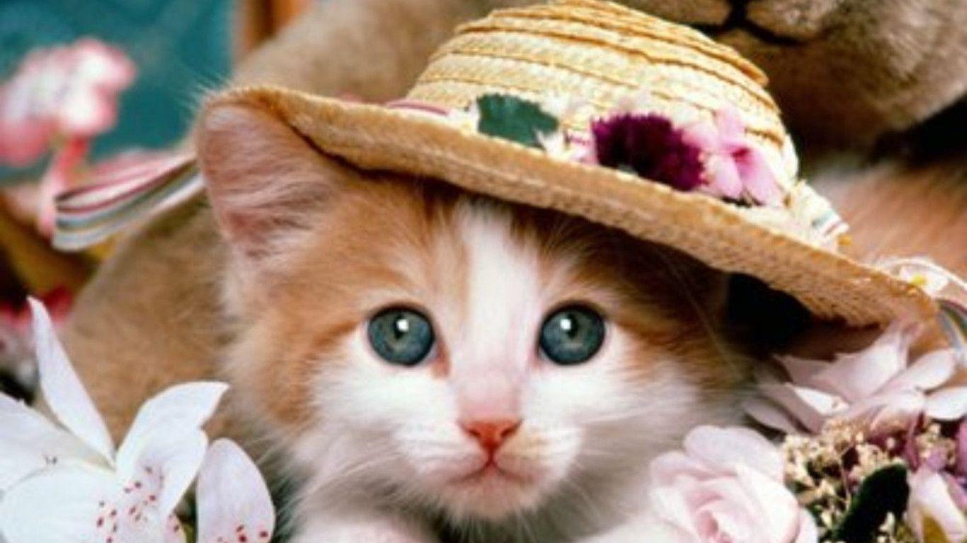 cat dog wallpaper cute | best image background