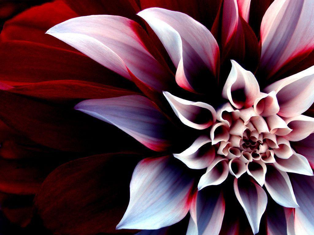 Download windows seven black 1024x768 wallpaper 1771 - Wallpapers For Desktop Backgrounds Flowers