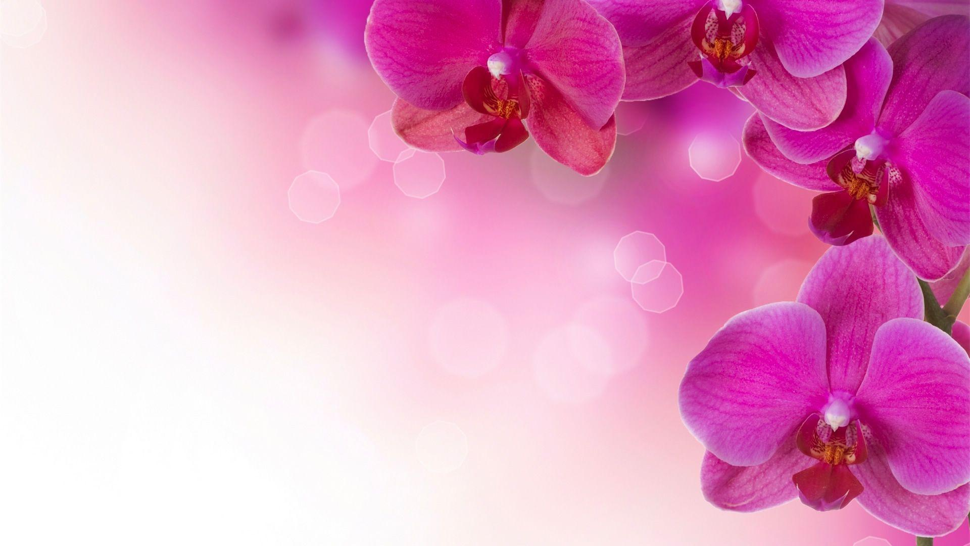 Flower Wallpapers 35 16340 HD Wallpaper | Wallroro.