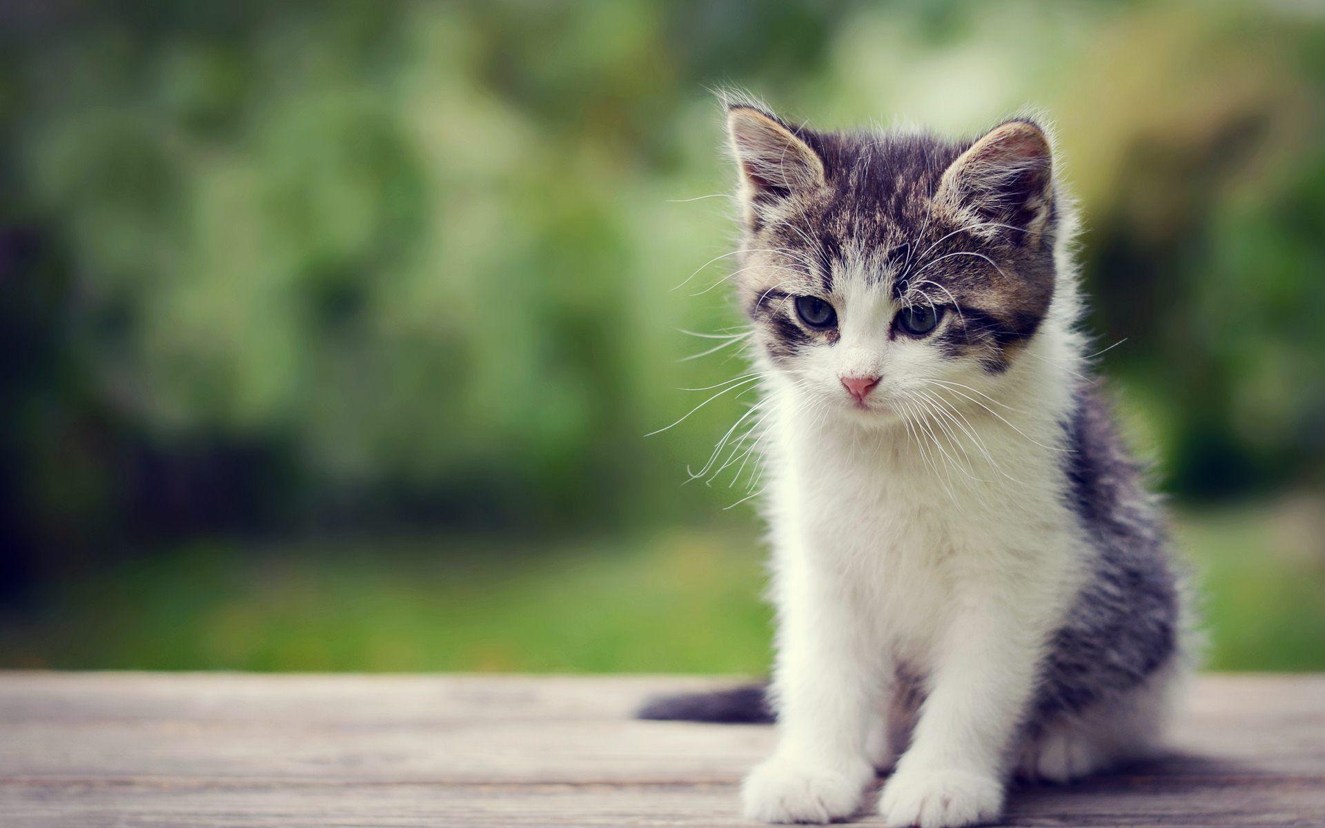 Cute Kittens Wallpapers - Wallpaper Cave