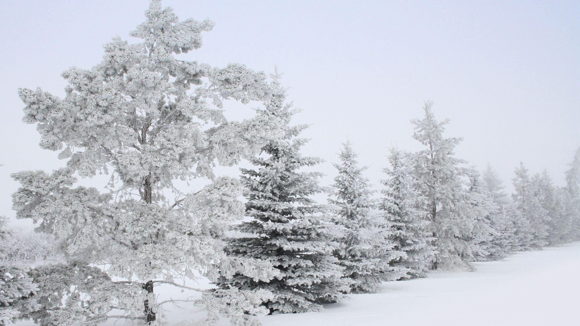 pin snow wallpapers trees - photo #35