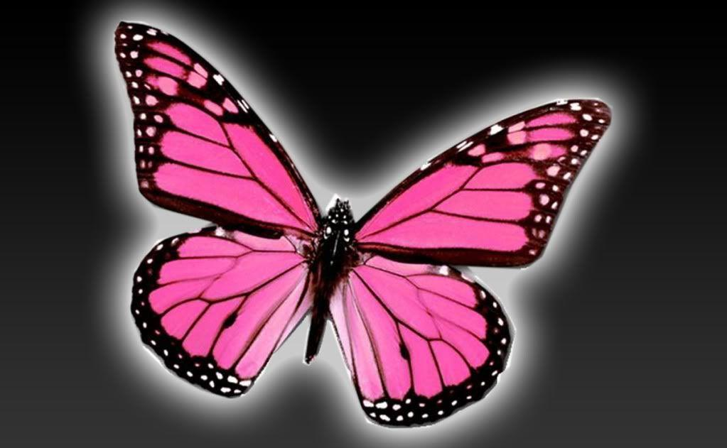 wallpaper pink butterfly - photo #21