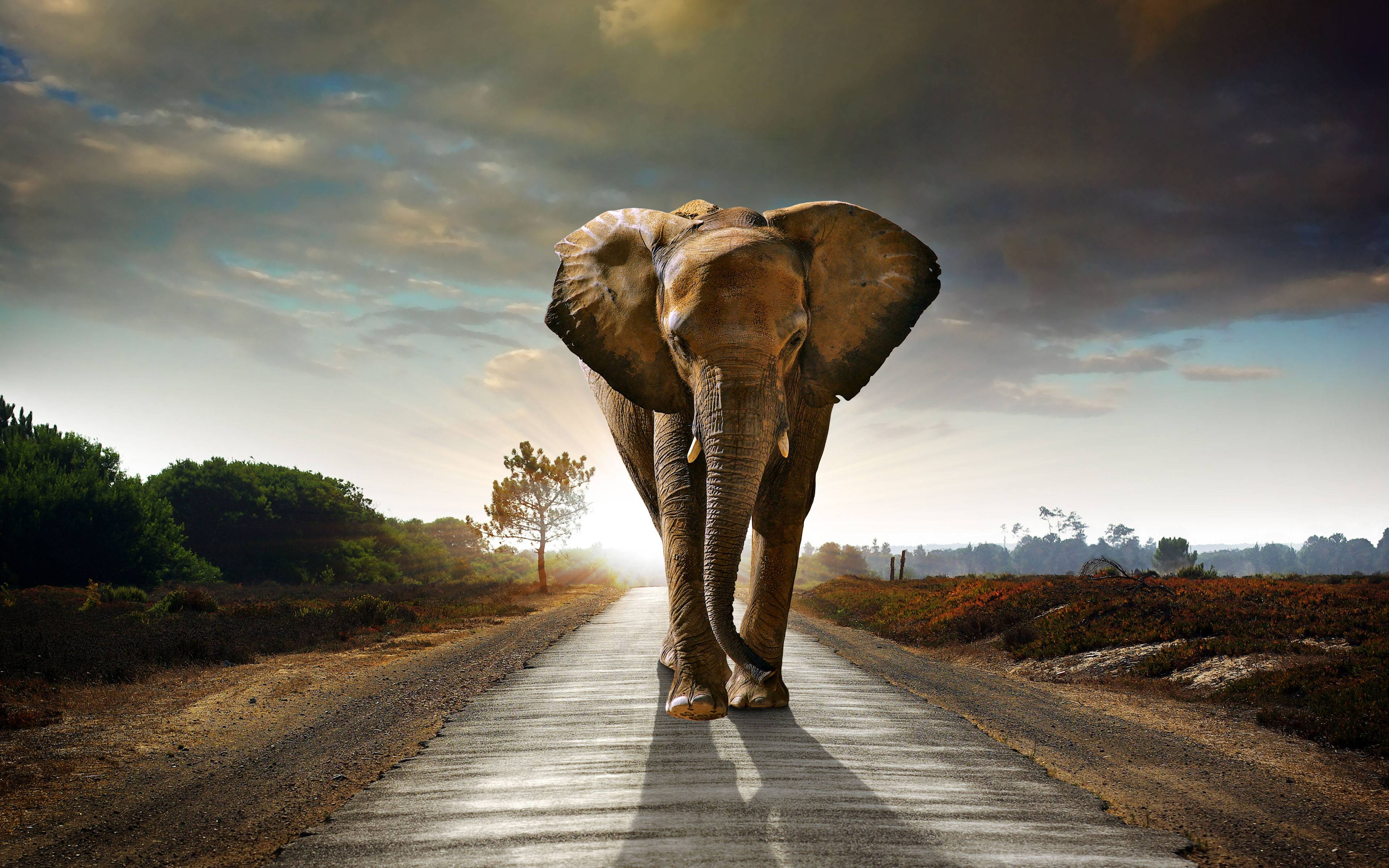 Wallpaper download elephant - African Elephant Wallpaper Free Download 10963 Wallpaper Cool