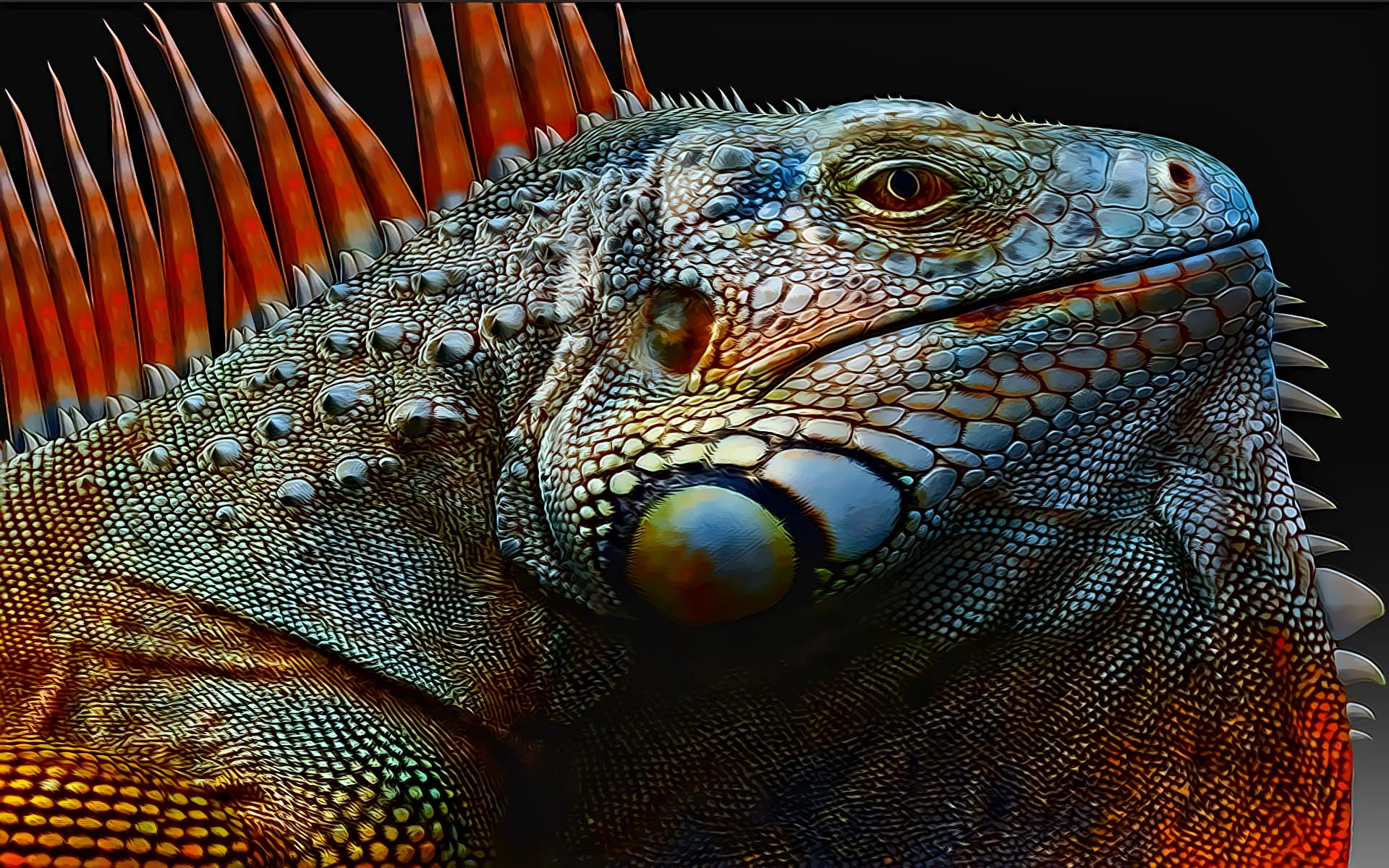 22 reptile hd wallpapers - photo #38
