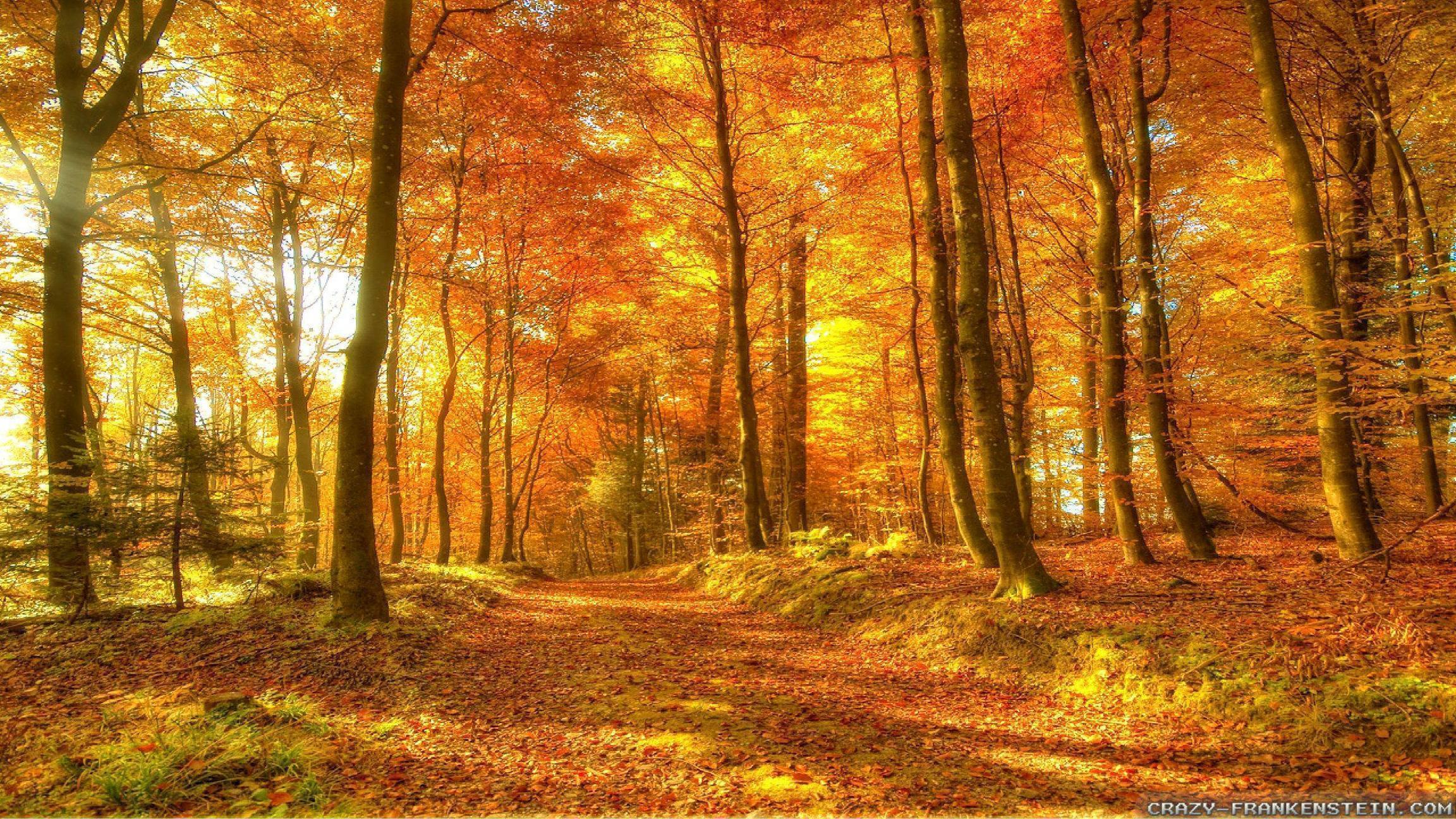 fall woods backgrounds wallpapers -#main