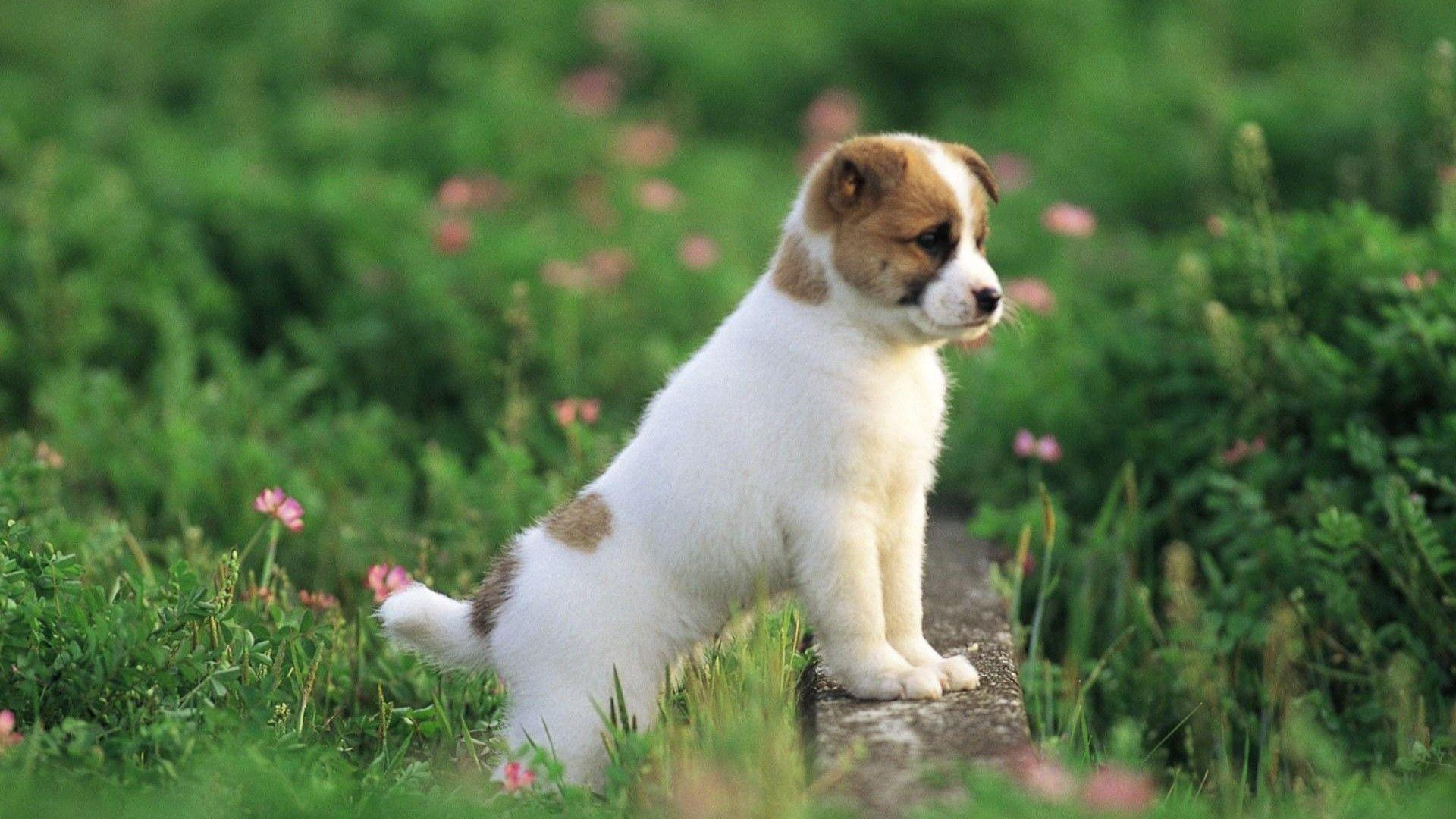 Cute Dog Hd Wallpapers 1920x1200PX ~ Awesome Beautiful Dog Wallpapers #