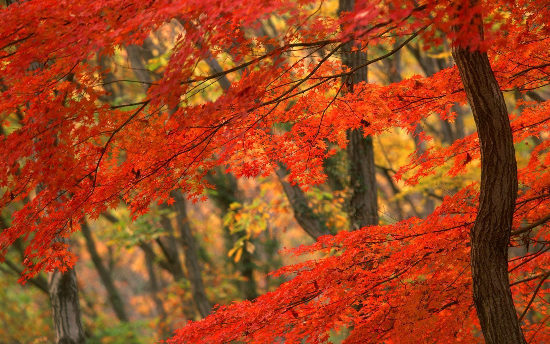 Fall Leaves Wallpapers Desktop Image & Pictures